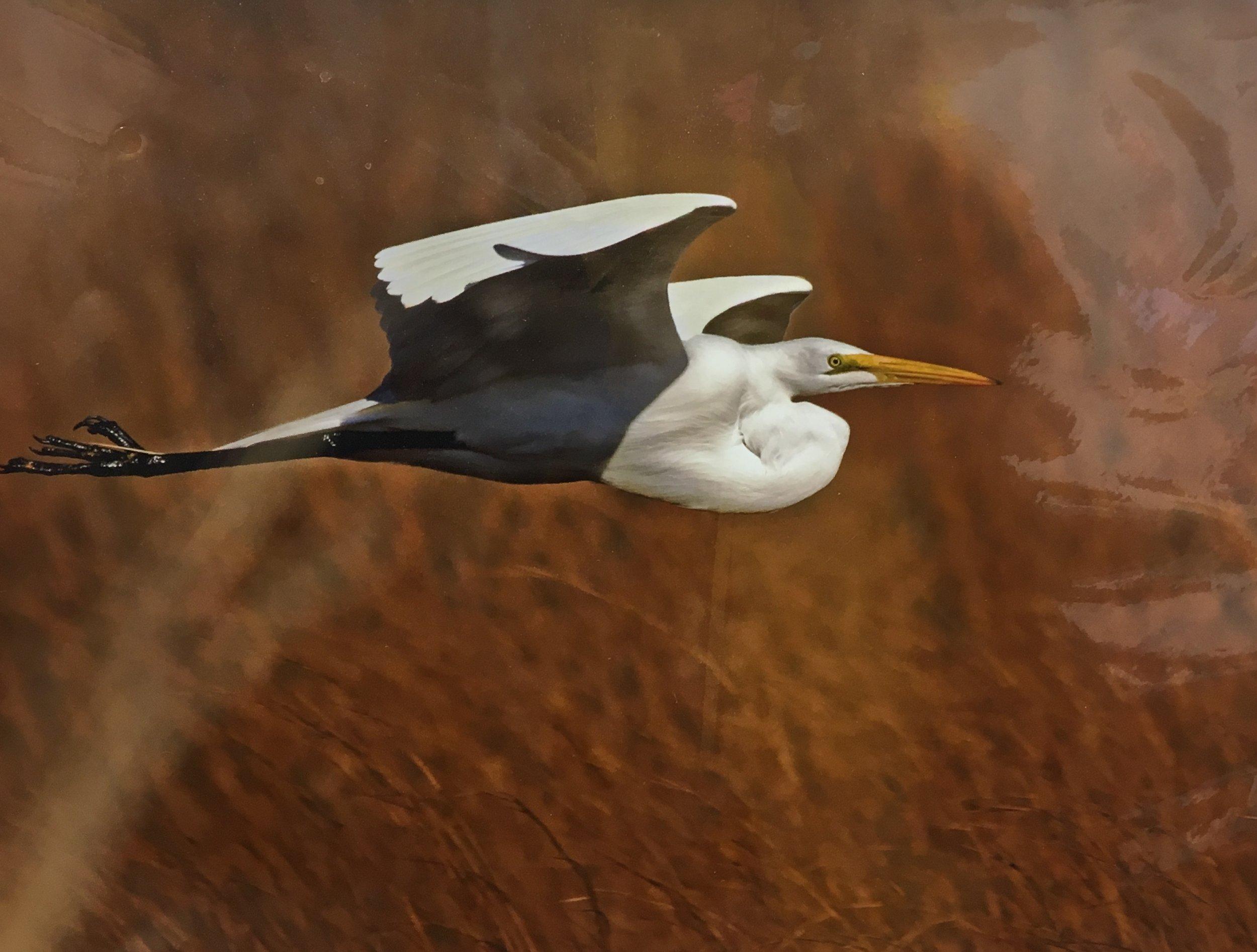 "Bird in Flight, 16""x 20"", unframed photography, $60"