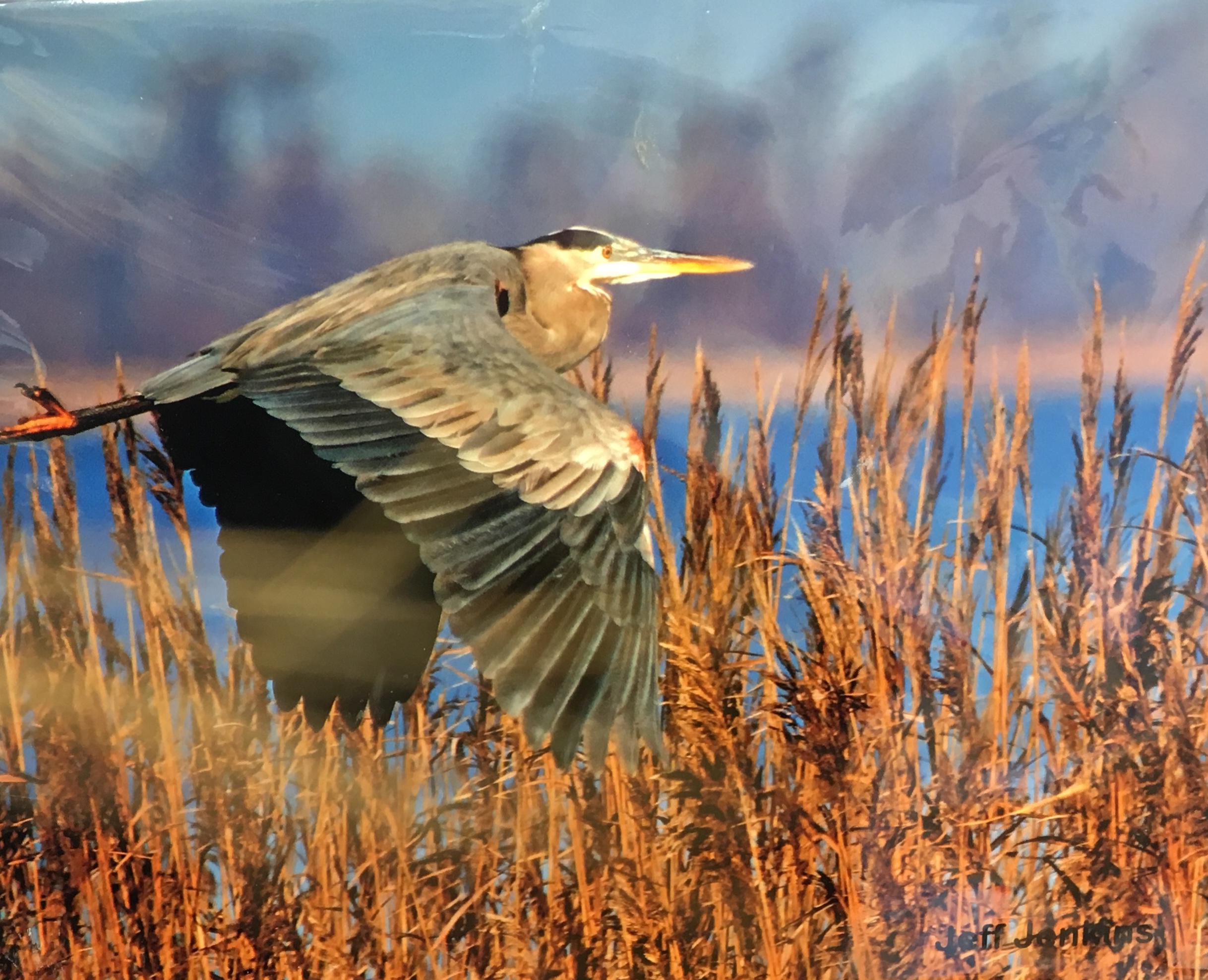 "Bird in Wheat, 11.5"" x 14"", unframed photography, $60"