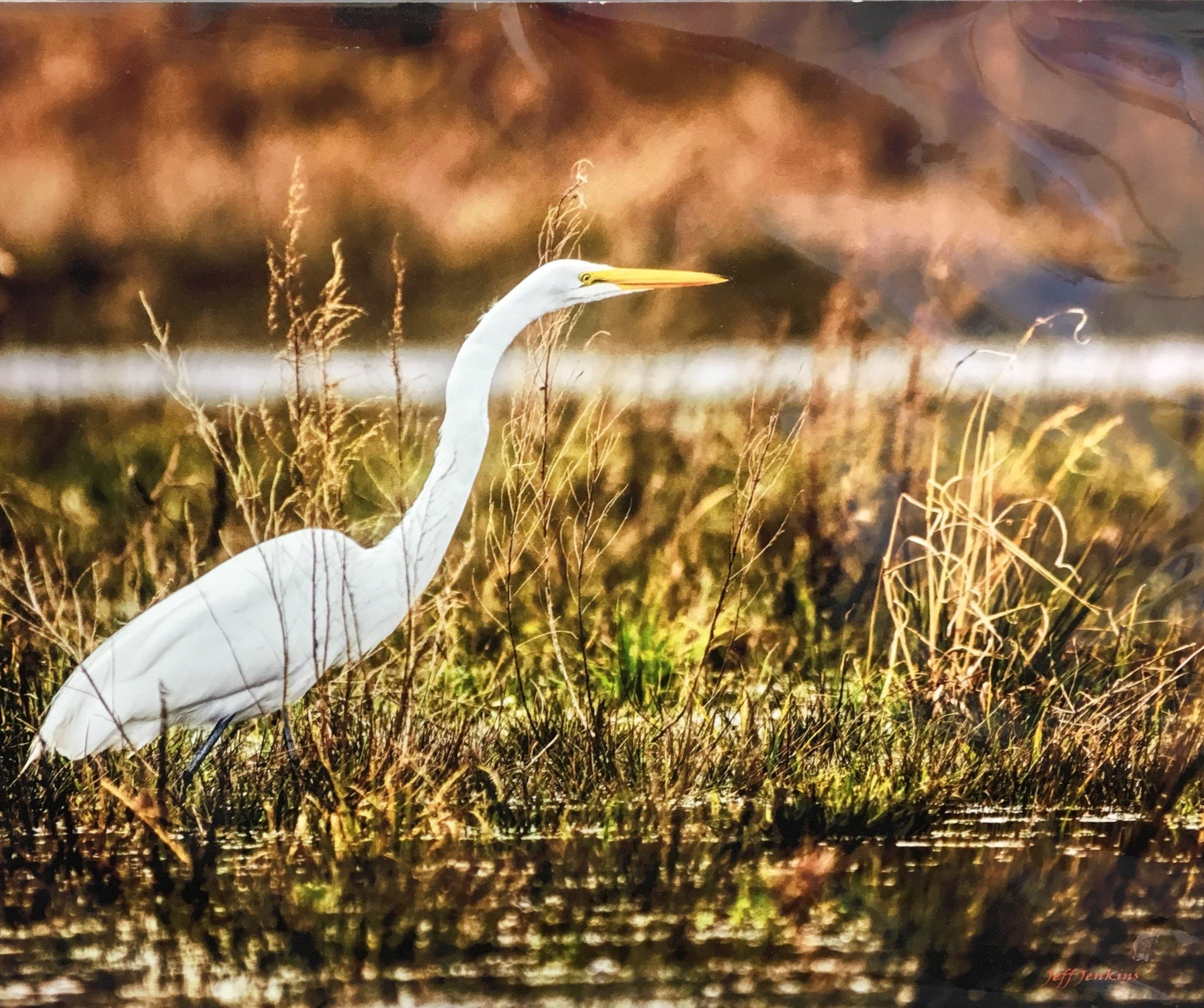 "White Egret, 11""x 14"", unframed photography, $40"