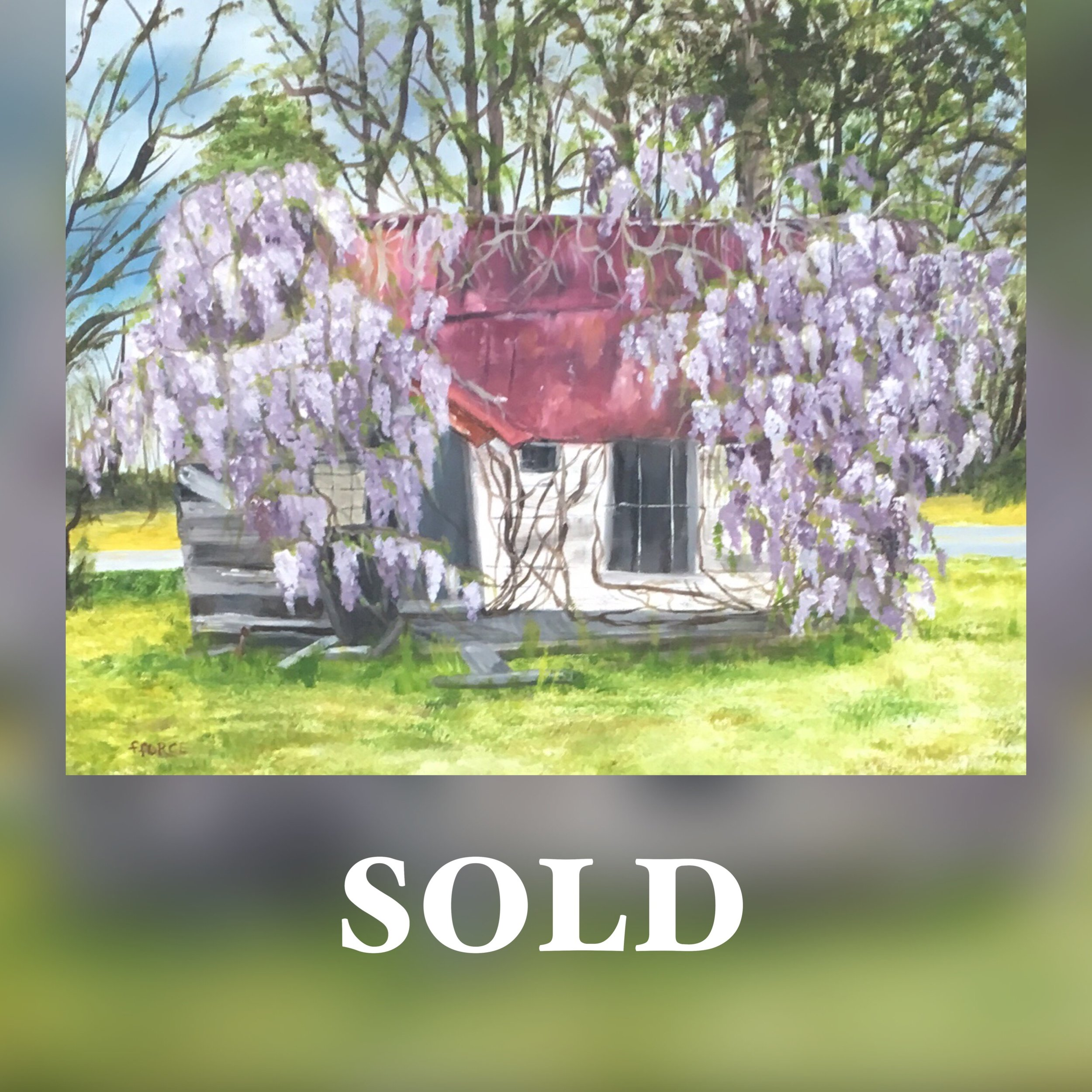 Wisteria - Force Sold.JPG