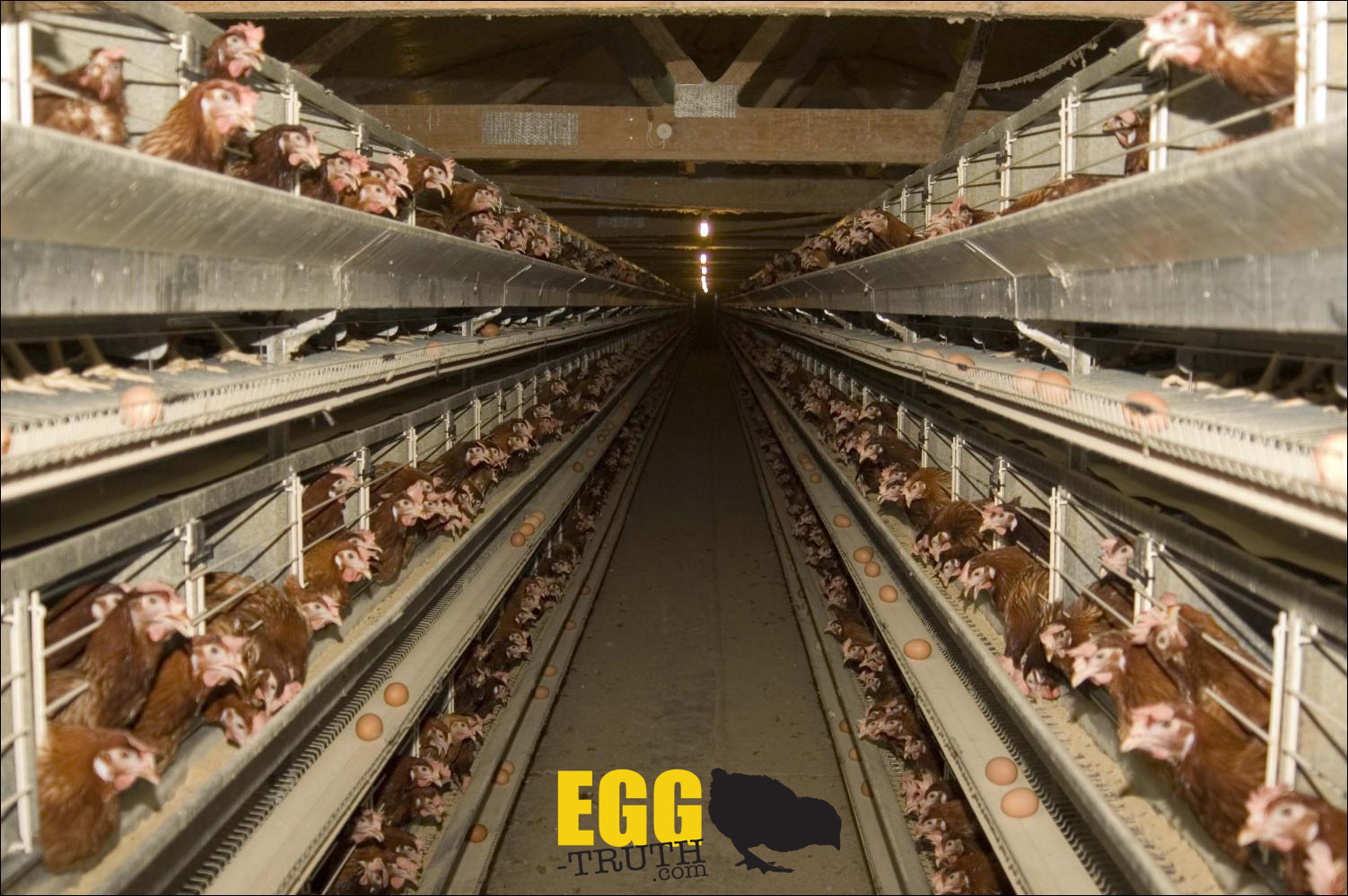 Battery_cages_egg_truth.jpg