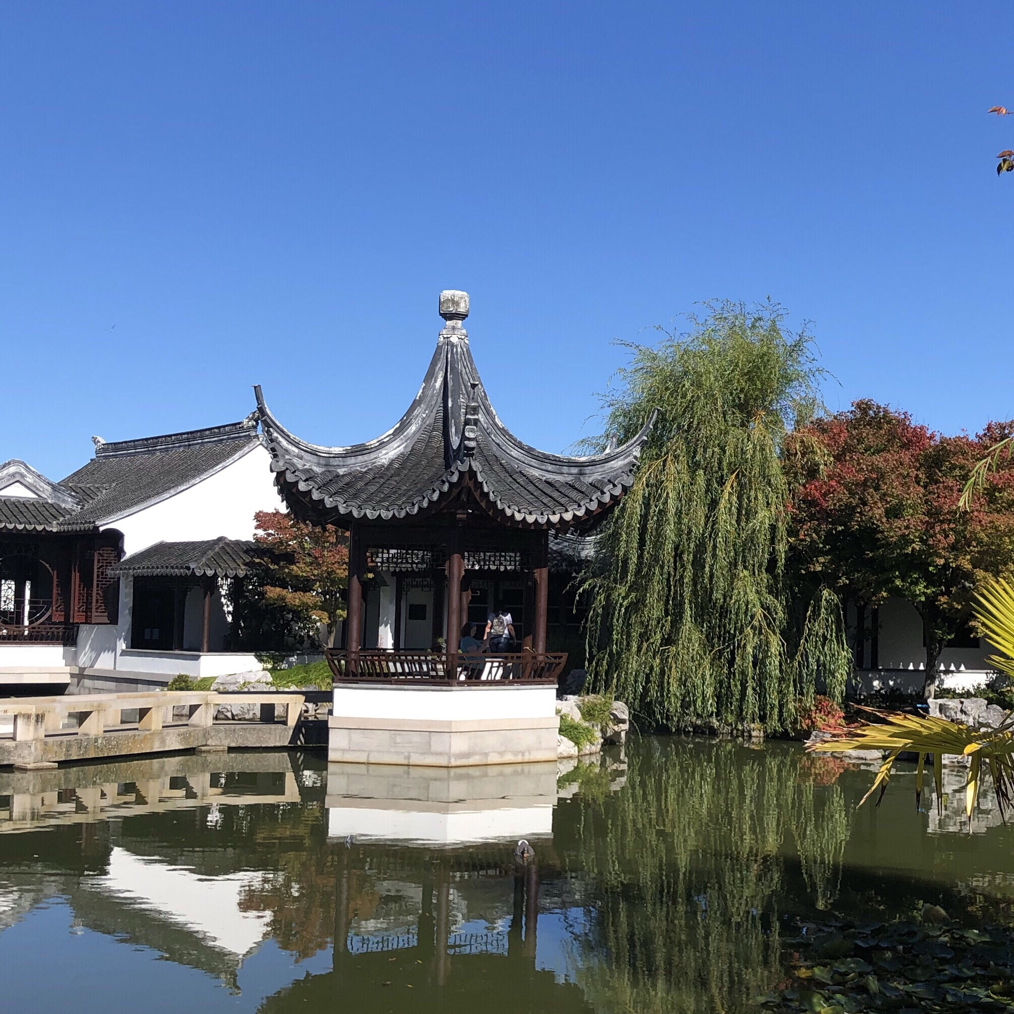 2.WANDER THE CHINESE GARDENS AND GRAB A TEA - Beautiful and tranquil spot to wander around and appreciate the gardens. Grab a traditional tea to enjoy by the water after.