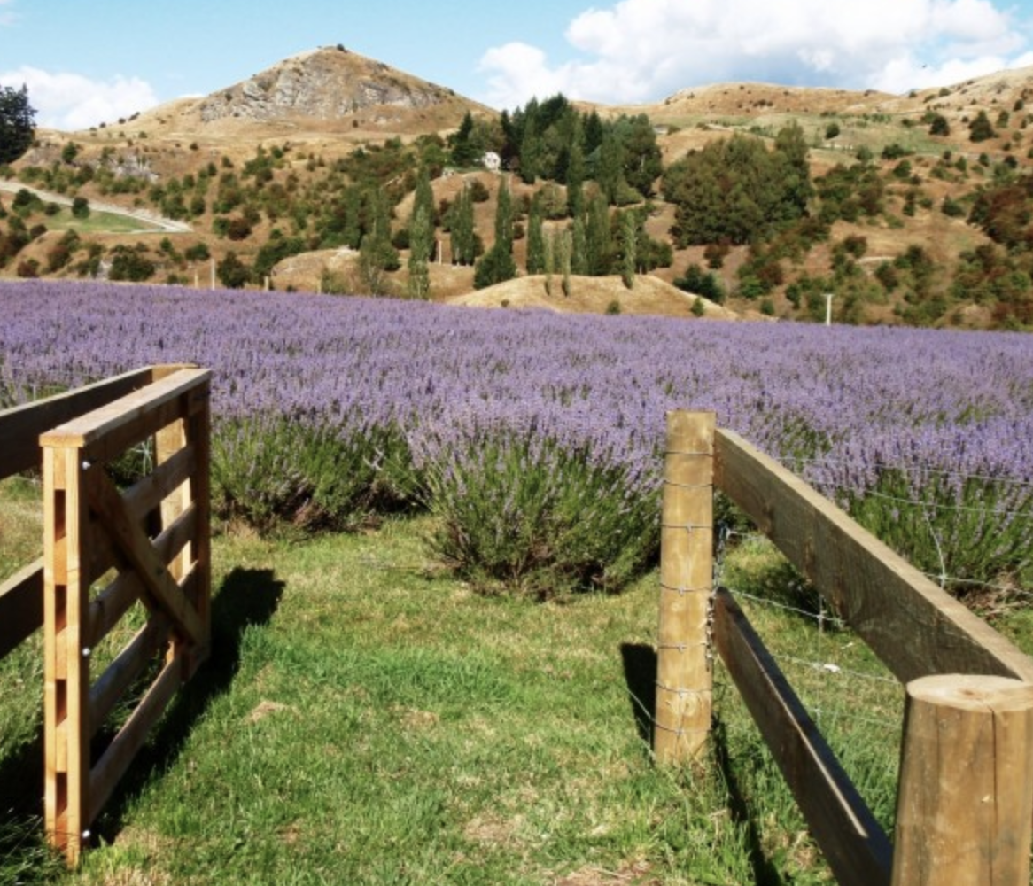 Lavender Farms - Wander through beautiful fields of Lavender, there's something endlessly tranquil about the smell and movement.