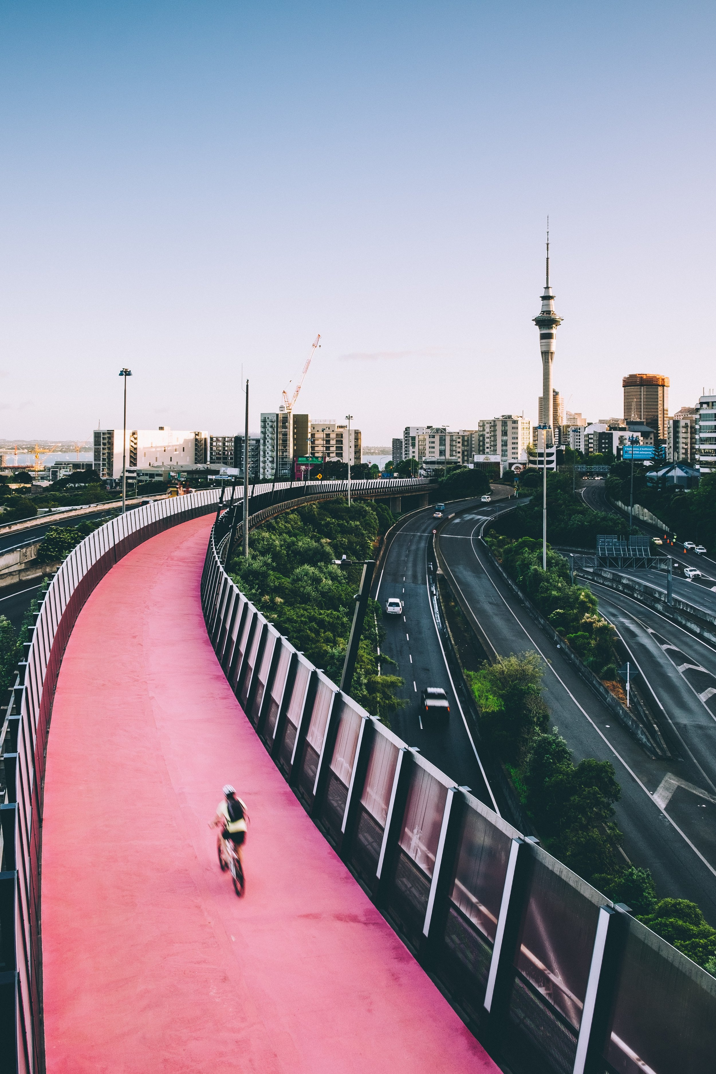 Romer exploring Auckland