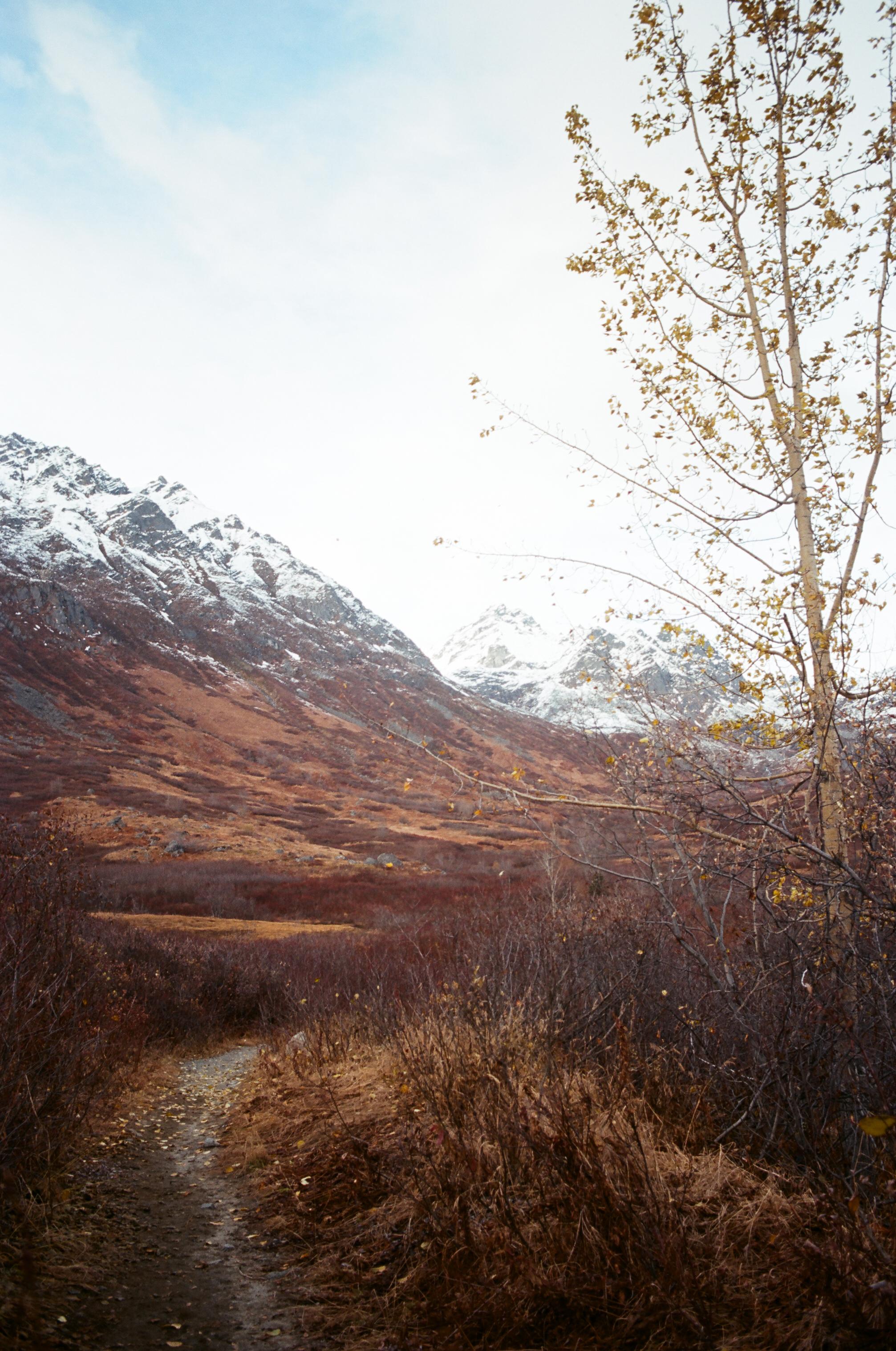 Hatcher Pass_Ektar 100_35mm_31.jpg