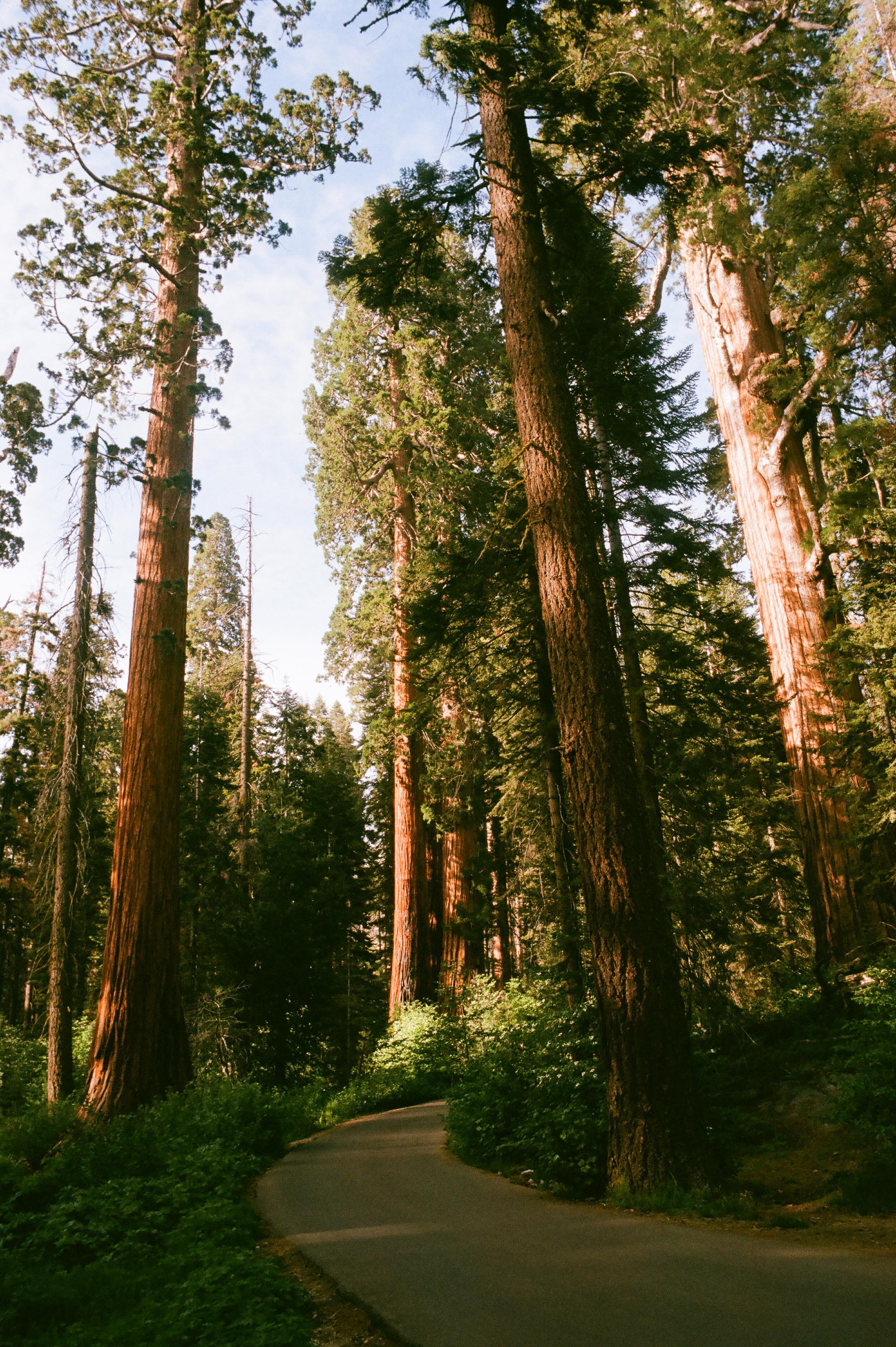 Sequoia_Superia 400_35mm_14.jpg