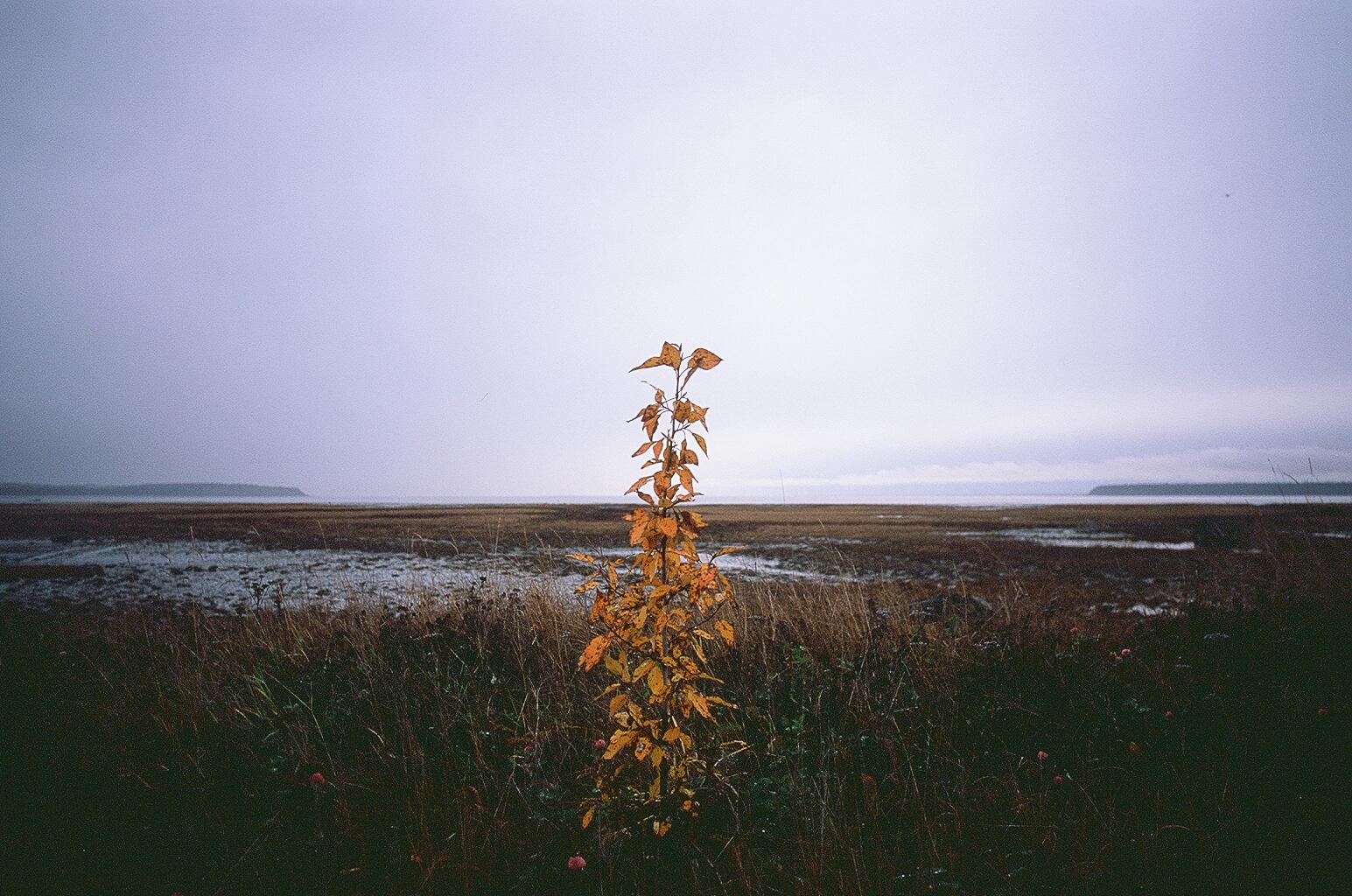 Alaska_Fuji Velvia 100_35mm_12.jpg