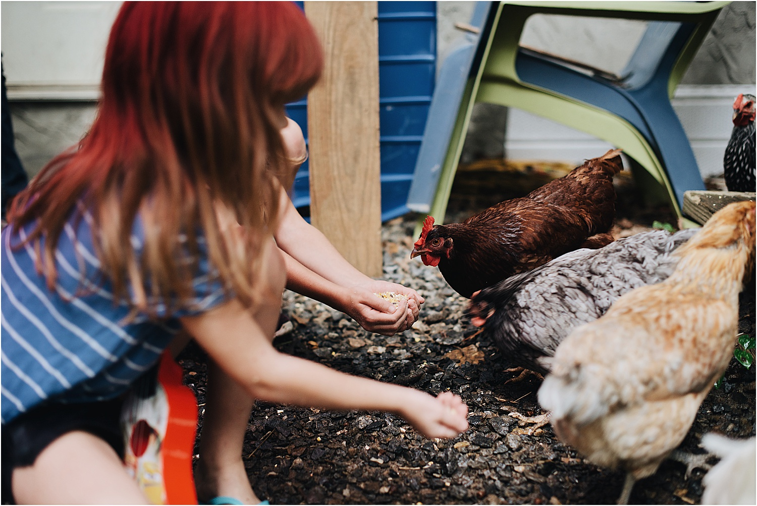 Chickens and children in Asheville, NC