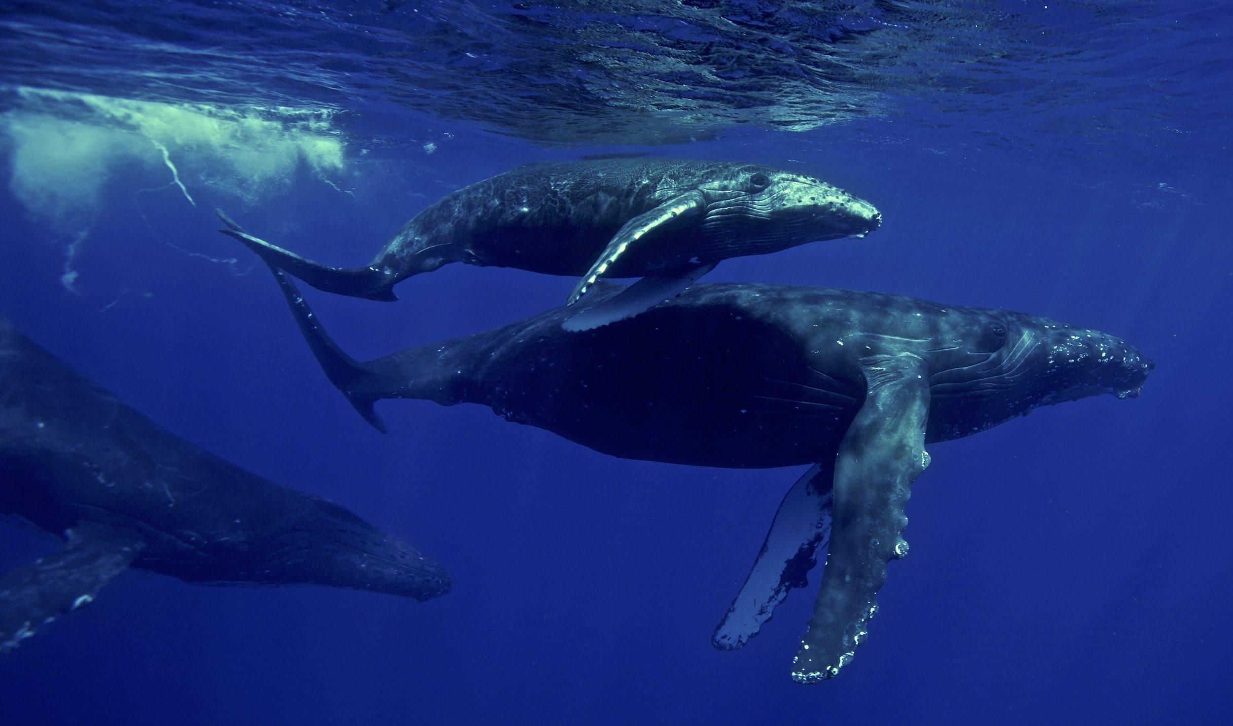 whale watching bob marlin charters