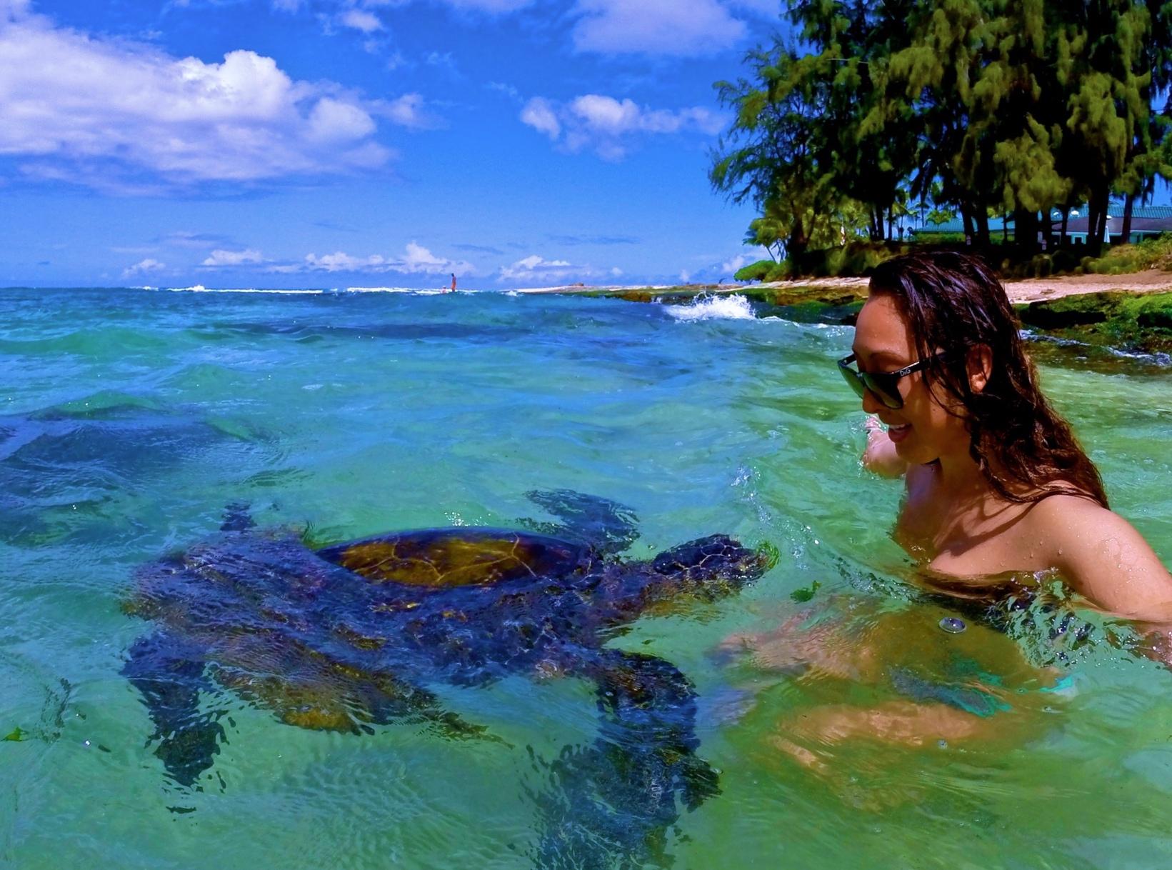 snorkel tour haleiwa oahu bob marlin charters