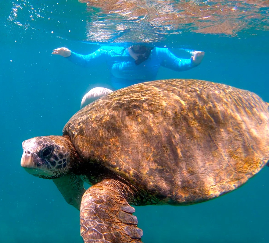 snorkel tour oahu bob marlin charters