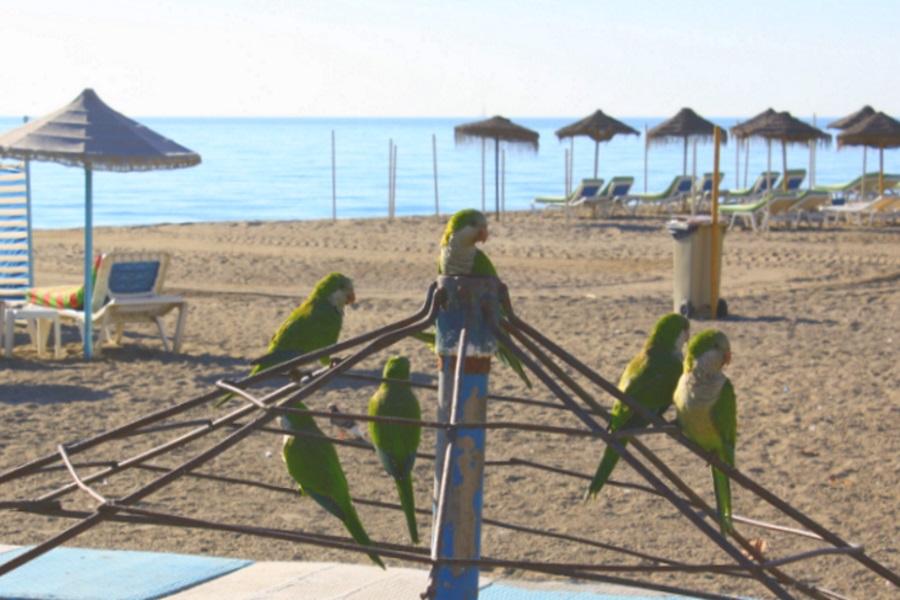 beach-birds.jpg