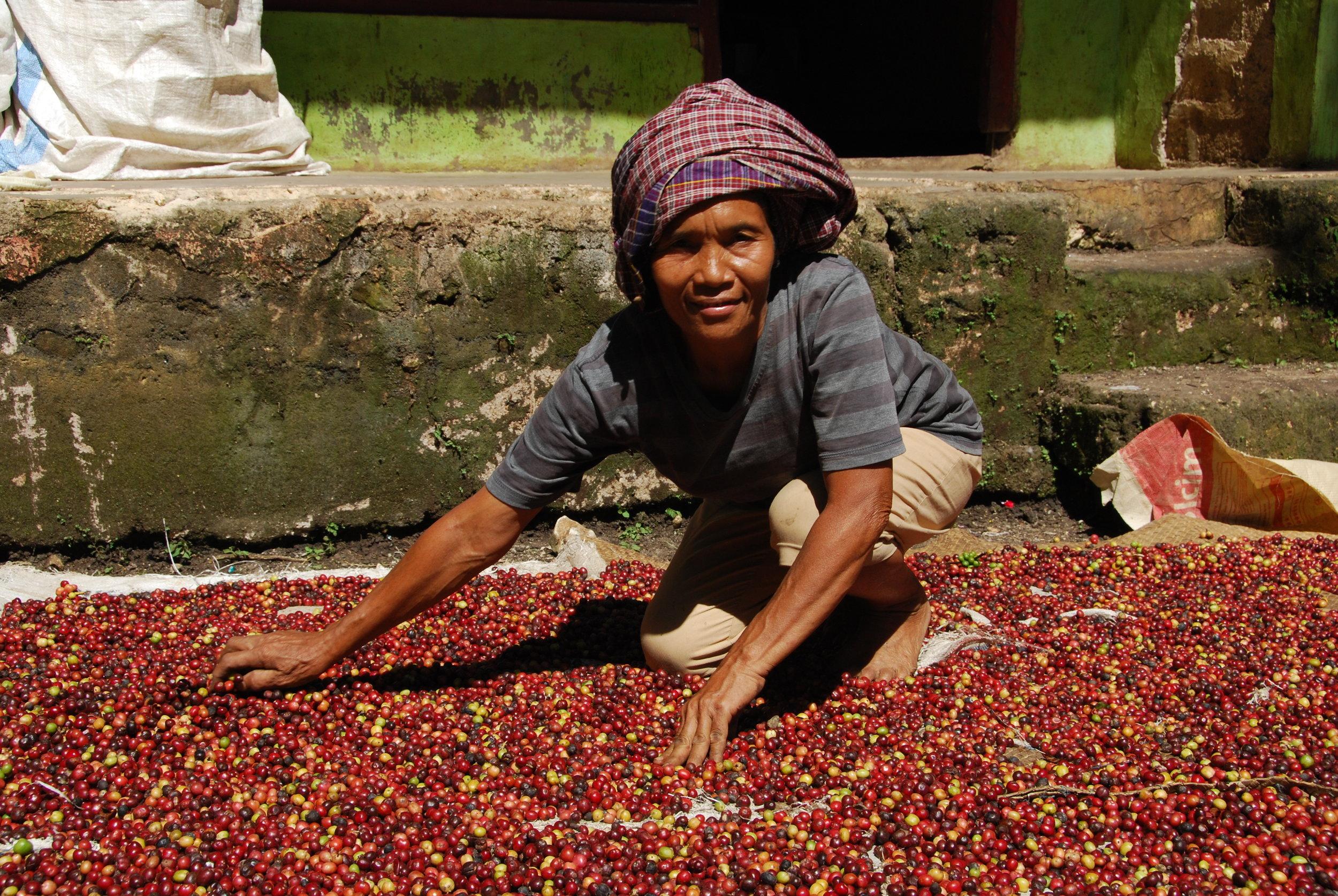 Sumatran Coffee.jpeg