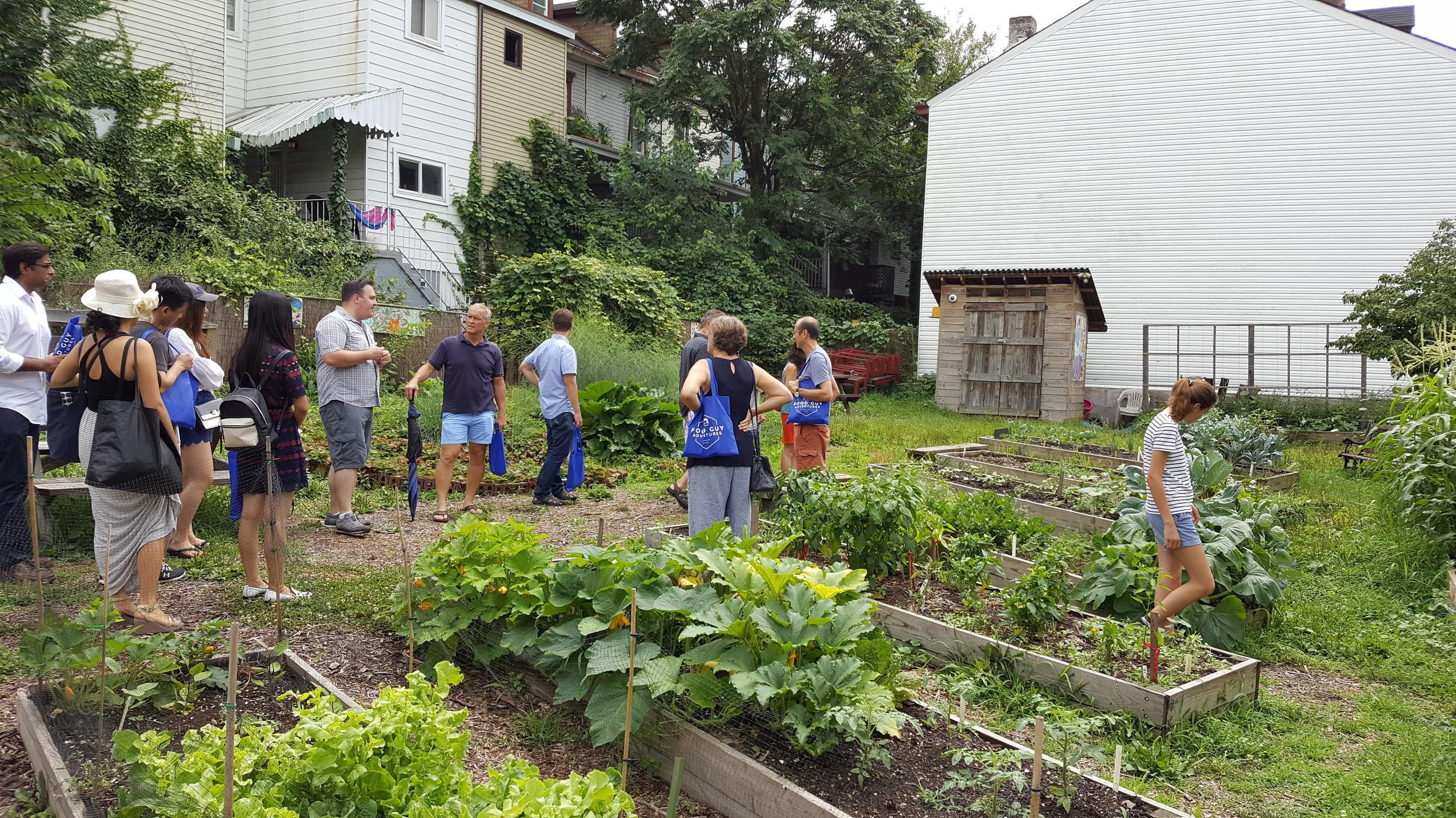 community garden4.jpg