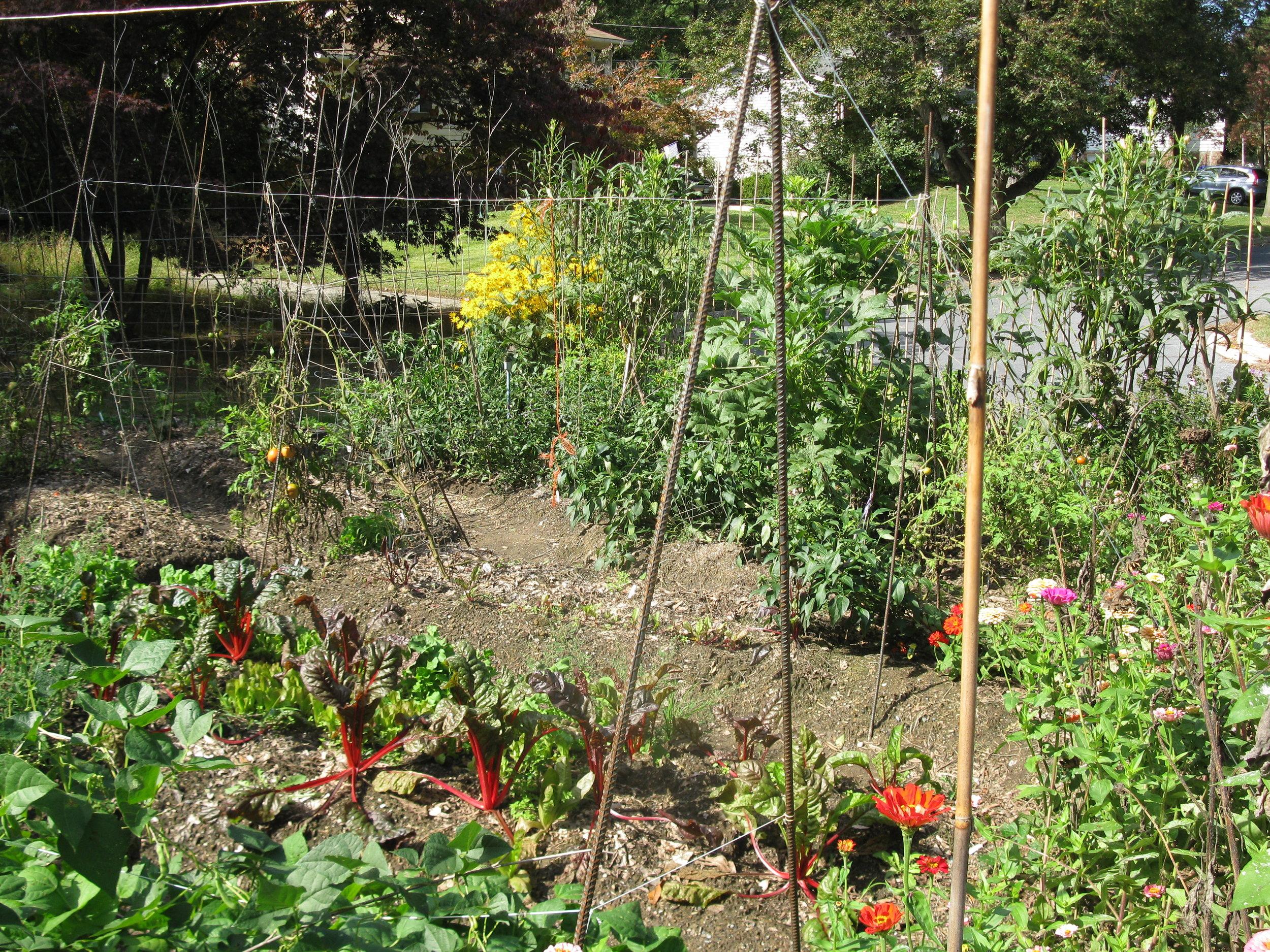 Front-Garden-Oct-10-2012_2.jpg