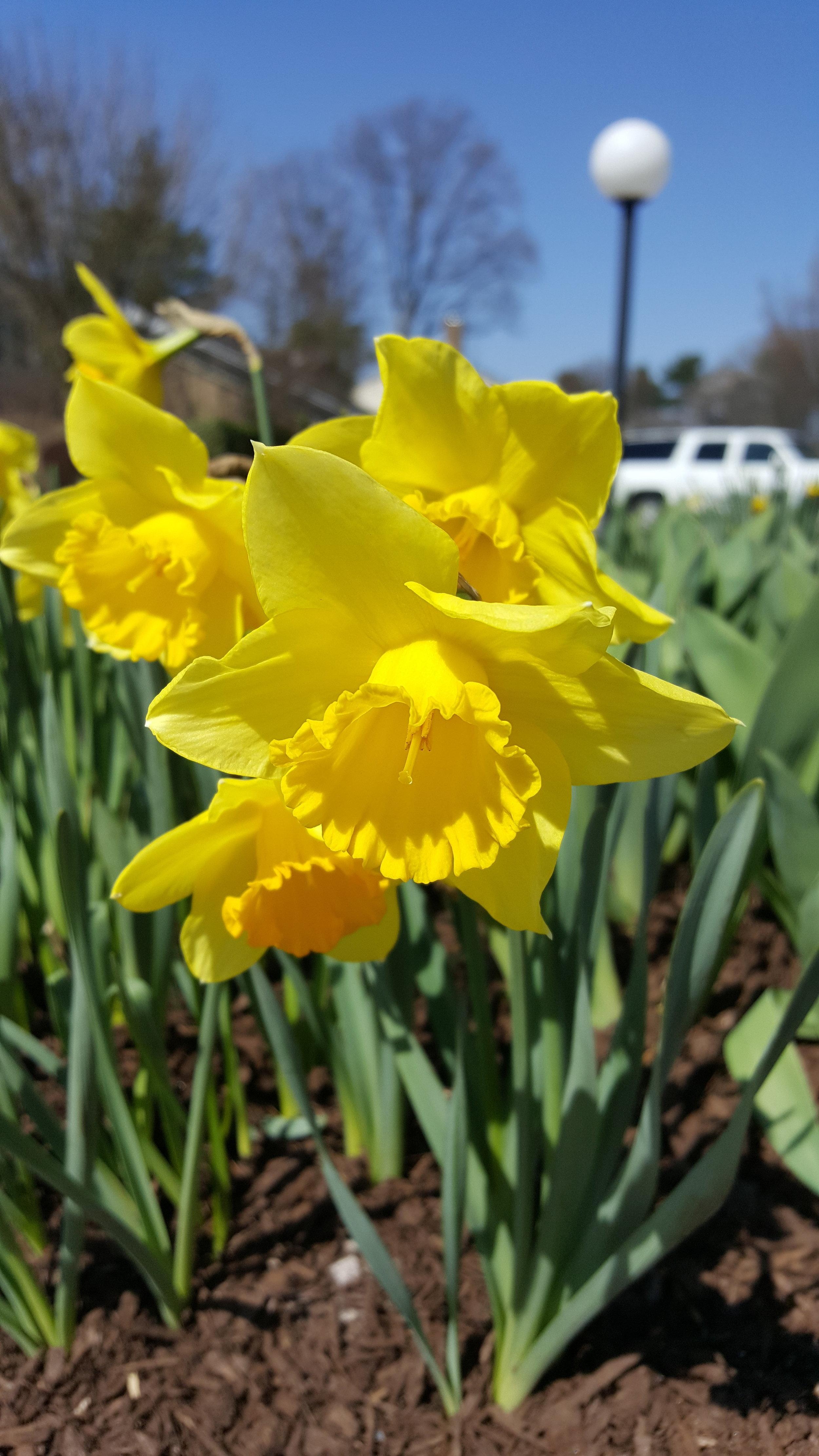 signs of spring_april.jpg