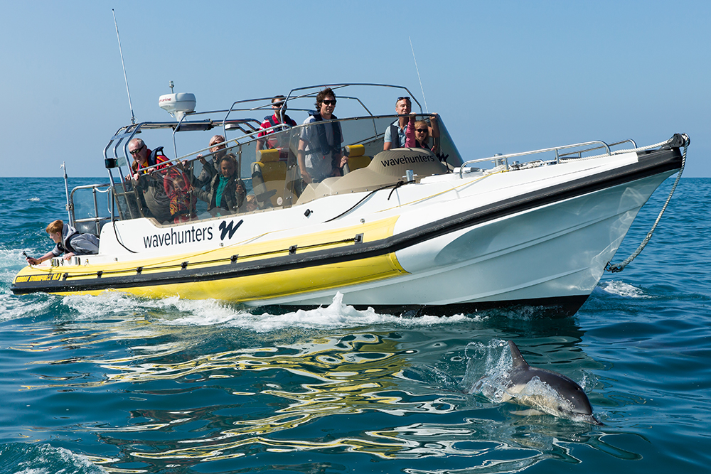 Sea Safari - Take to the ocean and discover Cornwall's stunning coastline and marine life. Wavehunters' boat trips get you up close and personal with Cornwall's unique heritage and stunning array of wildlife; from dolphins to seals, puffins to peregrine falcons.