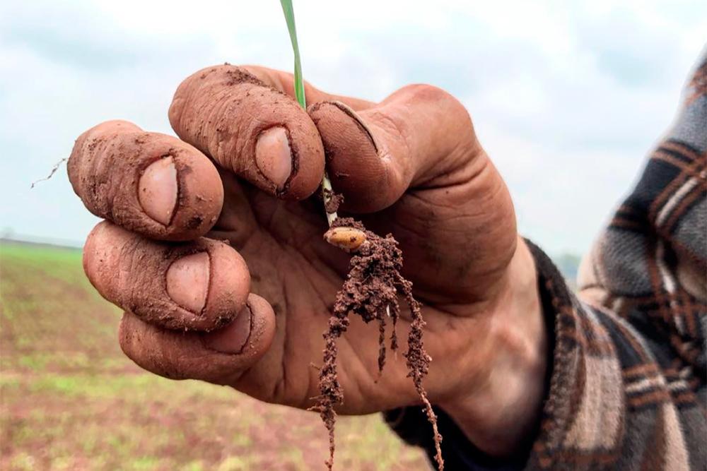 regenerative-agriculture.jpg