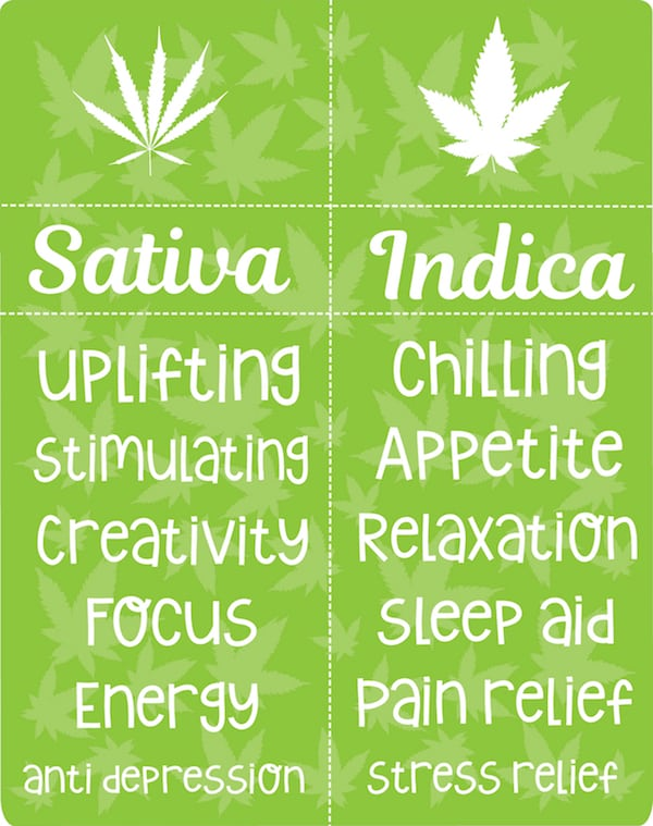 Indica Vs Sativa The Differences Might Surprise You Nuwu Cannabis