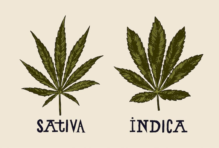 Indica-vs-Sativa-Appearance.jpg