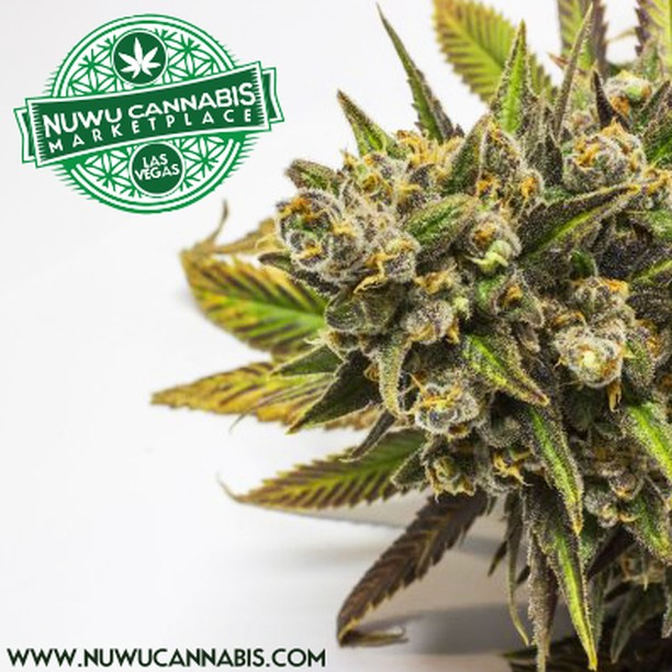 NuWu's knowledgable Budtenders are ready to answer any question that one may have! www.nuwucannabis.com
