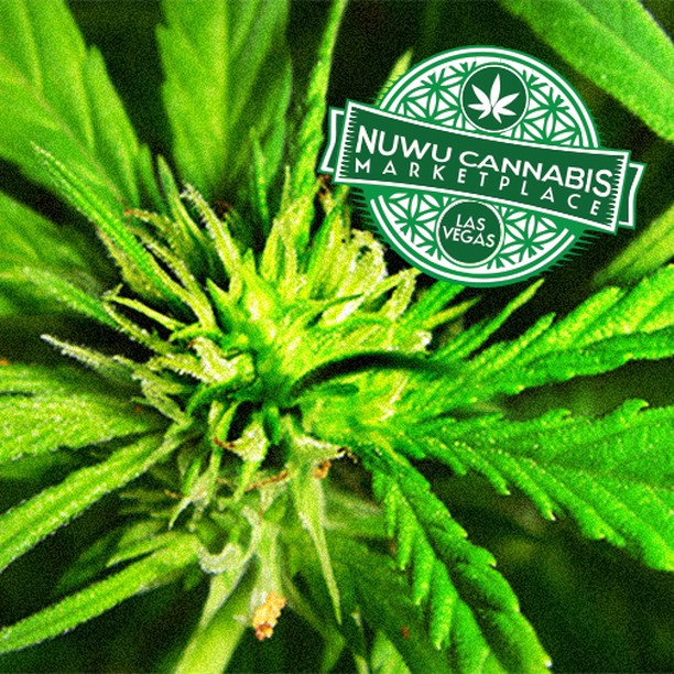 Good Morning #LasVegas! Enjoy #NuWu #Cannabis www.nuwucannabis.com