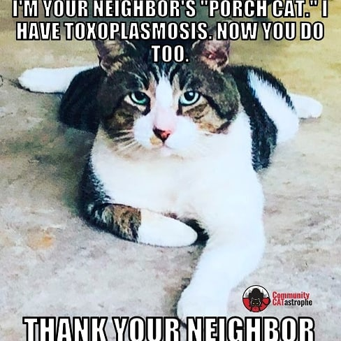 Your neighbor's #porchcat and other outdoor #cats spread a host of zoonotic diseases. You work to keep your family safe, but all that can be undermined by your neighbor, or the #cathoarders feeding #straycats and #feralcats in a #catcolony. #catsbelonginside #catsbelongindoors #goodneighborsdontfeedcats #catsofinstagram