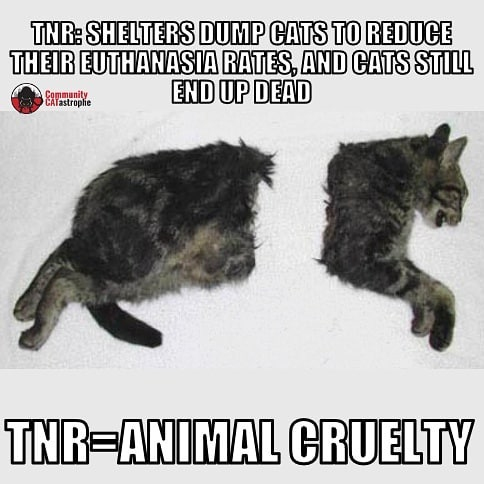"This #TNR cat didn't deserves this. #cathoarders and shelters padding their #liverelease stats like to claim #trapneuterreturn is a ""humane"" option. The reality is much uglier. #TNR #straycats and #feralcats die by cars, dogs, coyotes, wasting away from untreated illness, killed by sick humans. TNR = #animalcruelty. #tnrfail #catsbelonginside #catsbelongindoors"