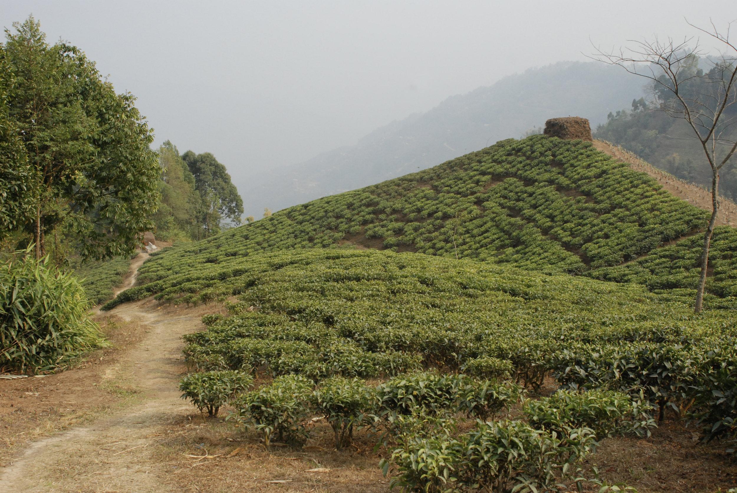 20090318_Darjeeling 515.JPG
