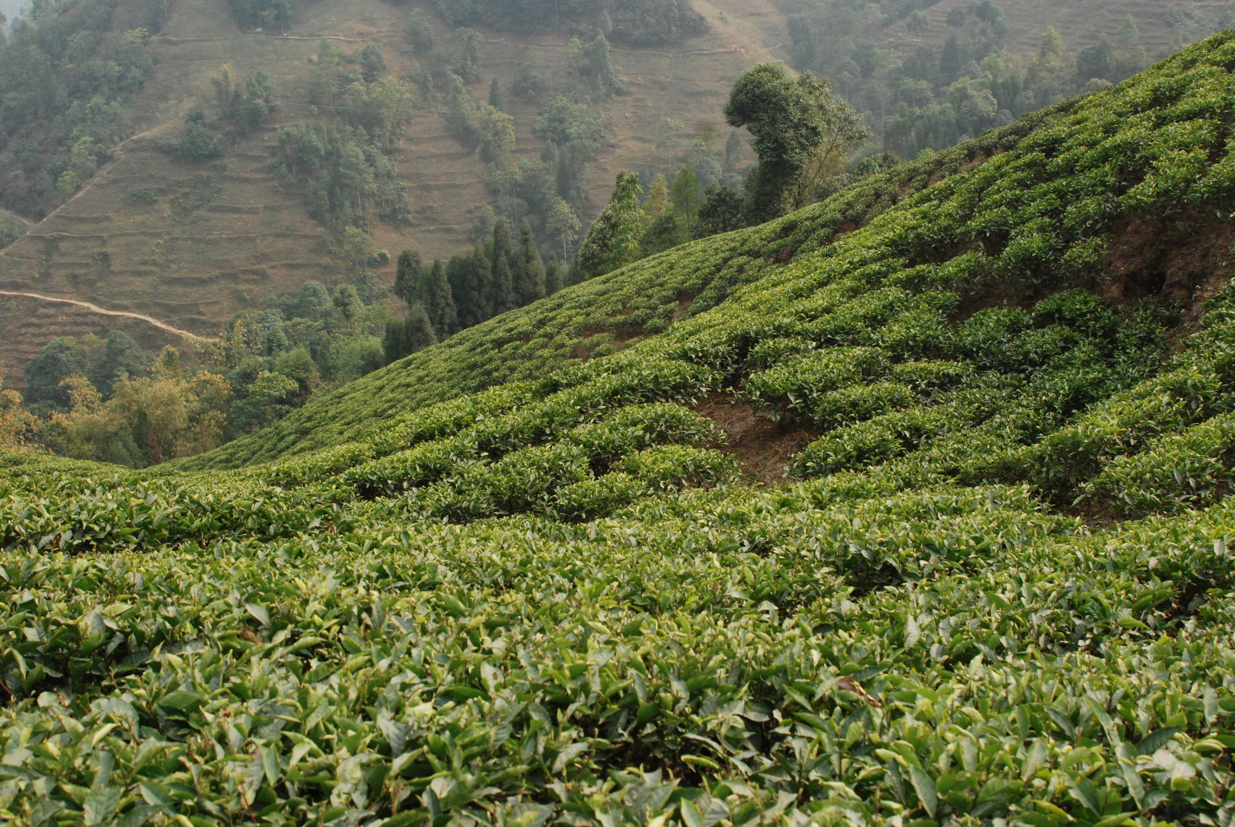 20090318_Darjeeling 543.JPG