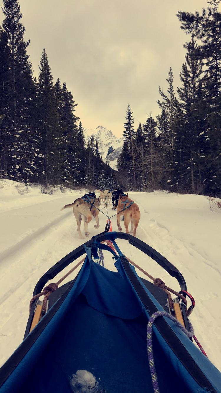 travel-blog-blogger-redhead-round-the-world-canada-dogs-sled-snow.JPG