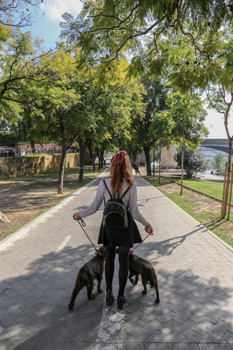 travel-blog-blogger-spain-sevilla-dogs-redhead-round-the-world.JPG