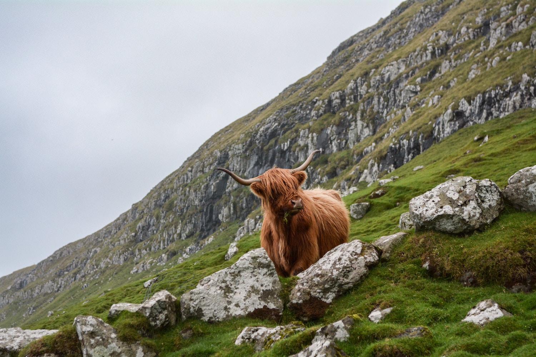 redhead-round-the-world-blogger-scotland-destinations-cow-highland.jpg