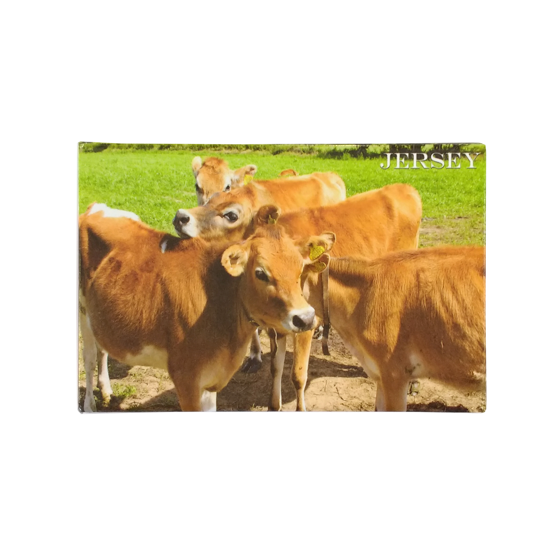 cows jersey magnet.png