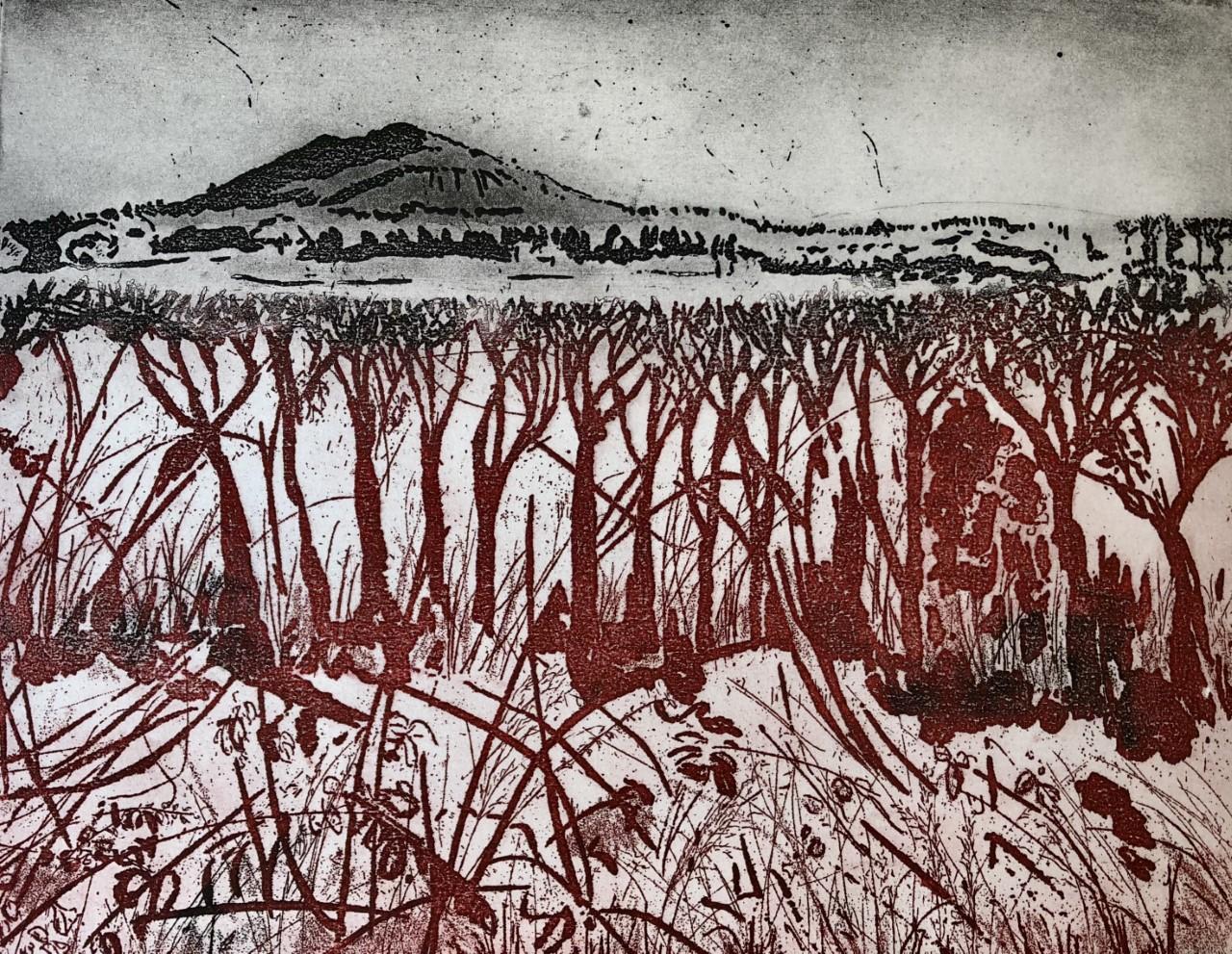 From Hedgerow to Hillside (The Wrekin)