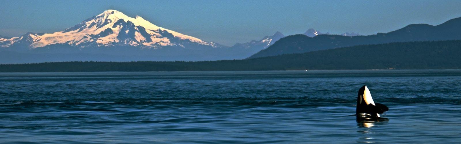 11.-san-juan-islands-orcas_2.jpg