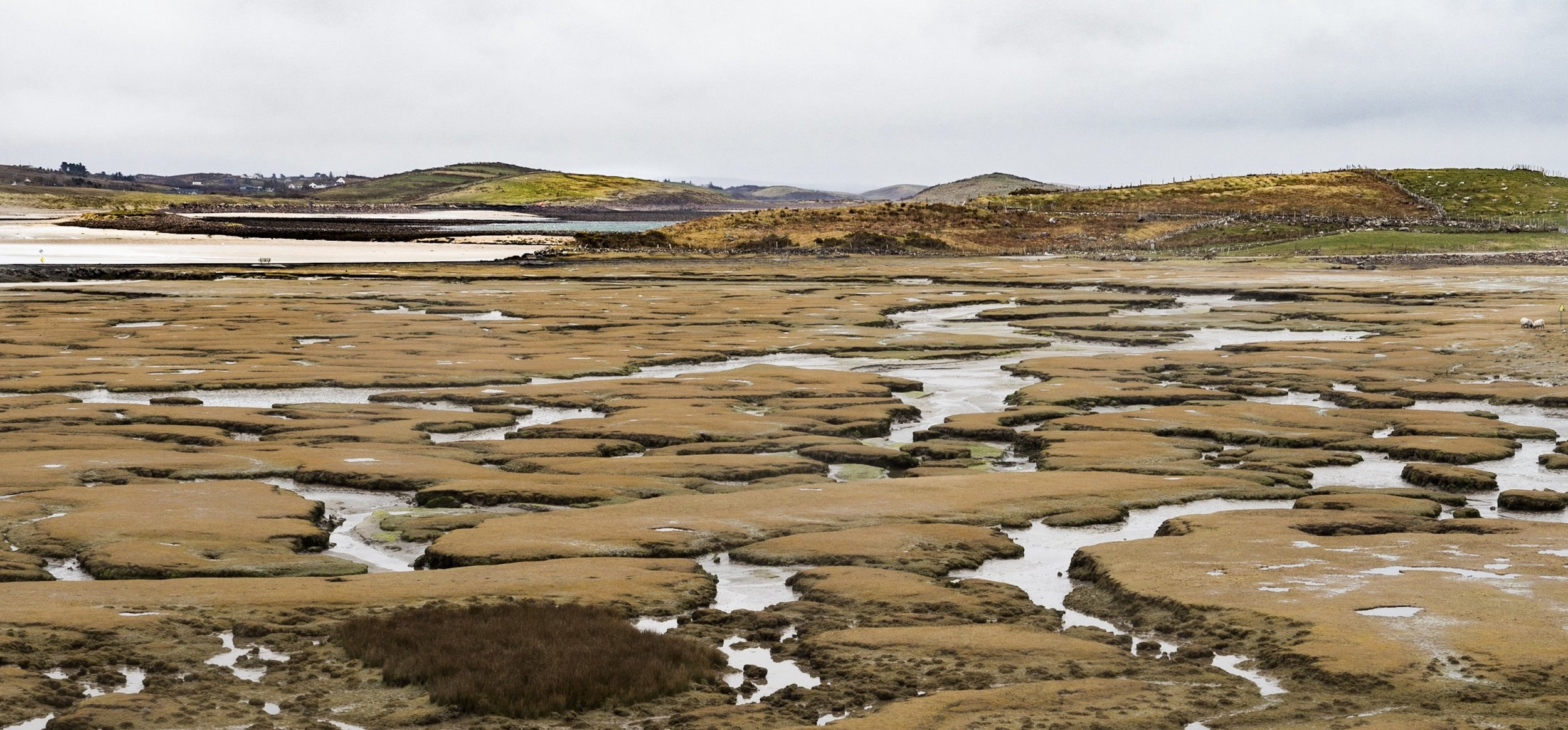 Nearing Achill Island in Ireland, a little unplanned detour off the main road brought us to the edge of a tidal marsh