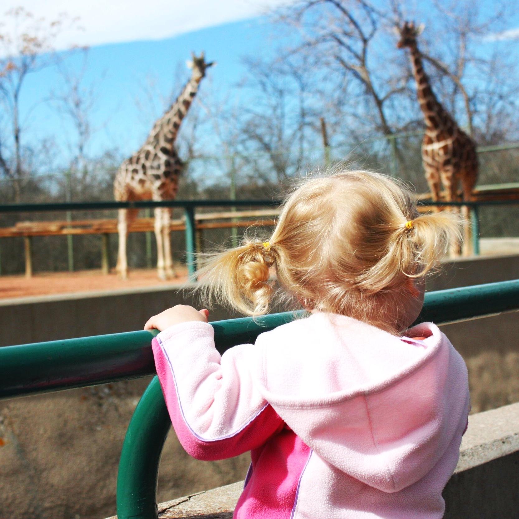 zoo+pic.jpg