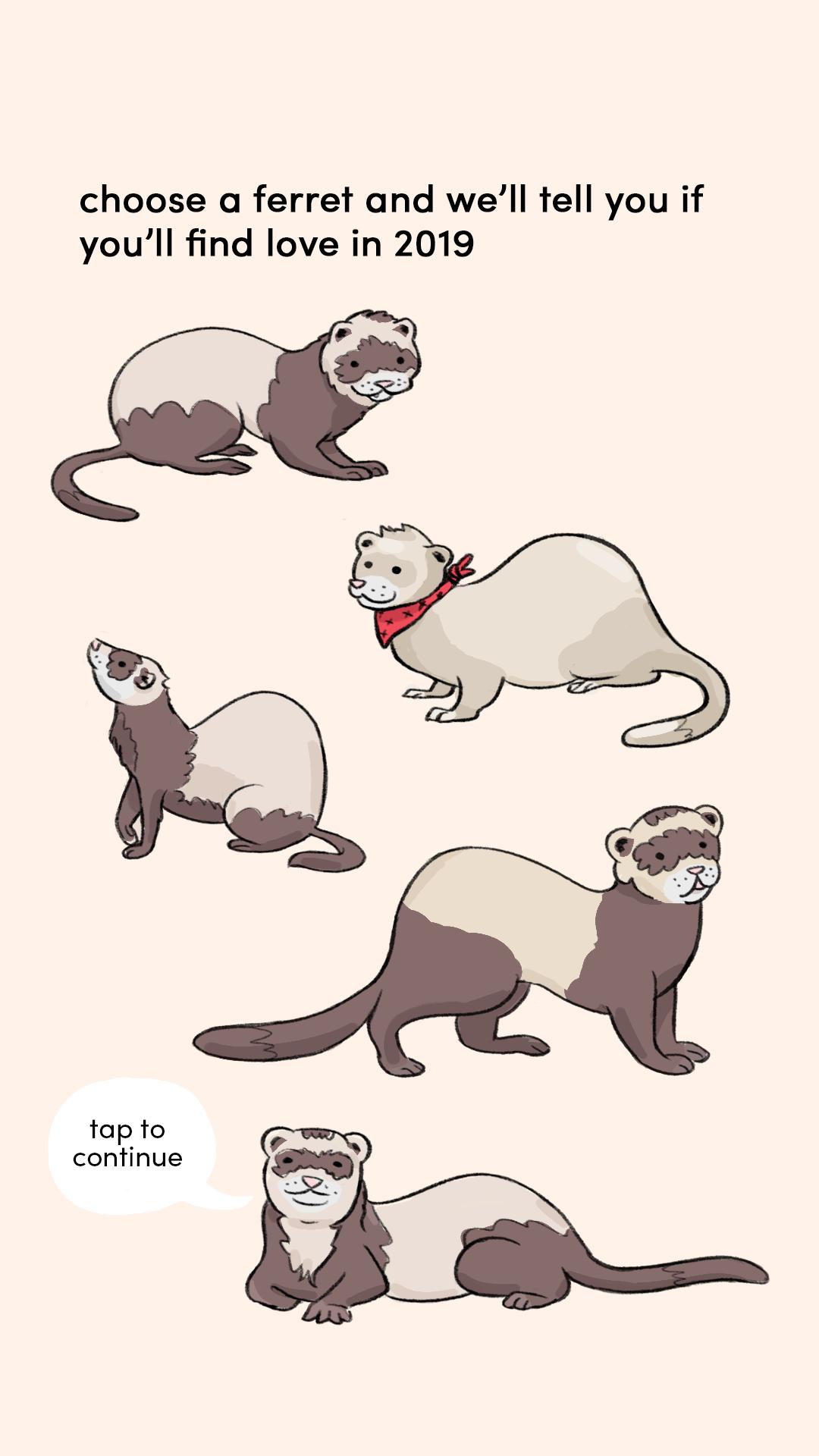 choose a ferret 1.png