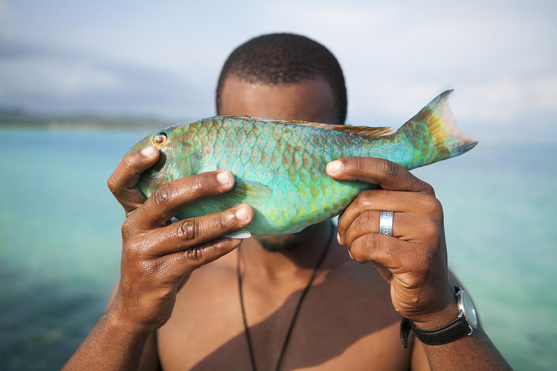 diephuis-jamaica-parrotfish.jpg