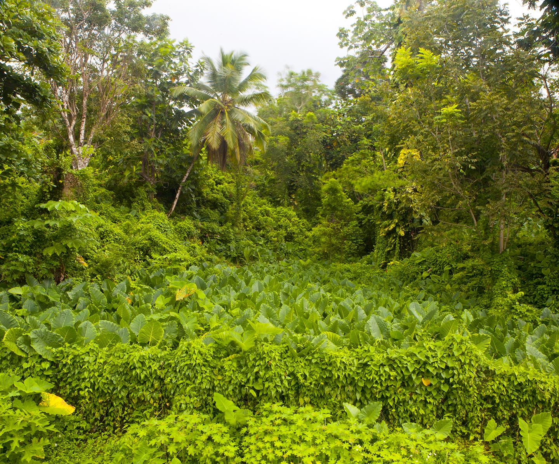 diephuis-jamaica-jungle.jpg