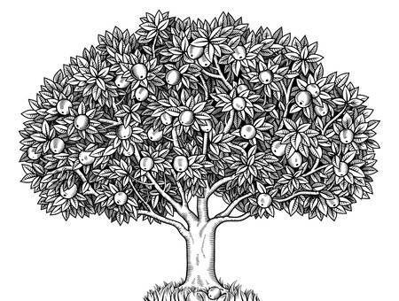 29869942-stock-vector-engraved-apple-tree-full-of-ripe-apples.jpg