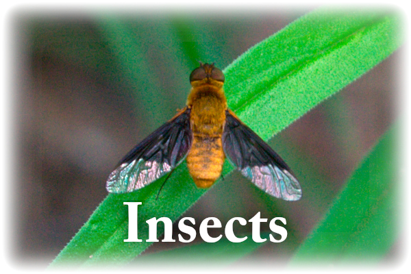insects 01.jpg