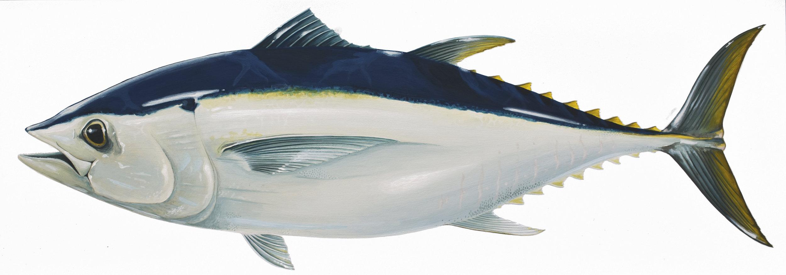 SBT Southern Bluefin Tuna.jpg