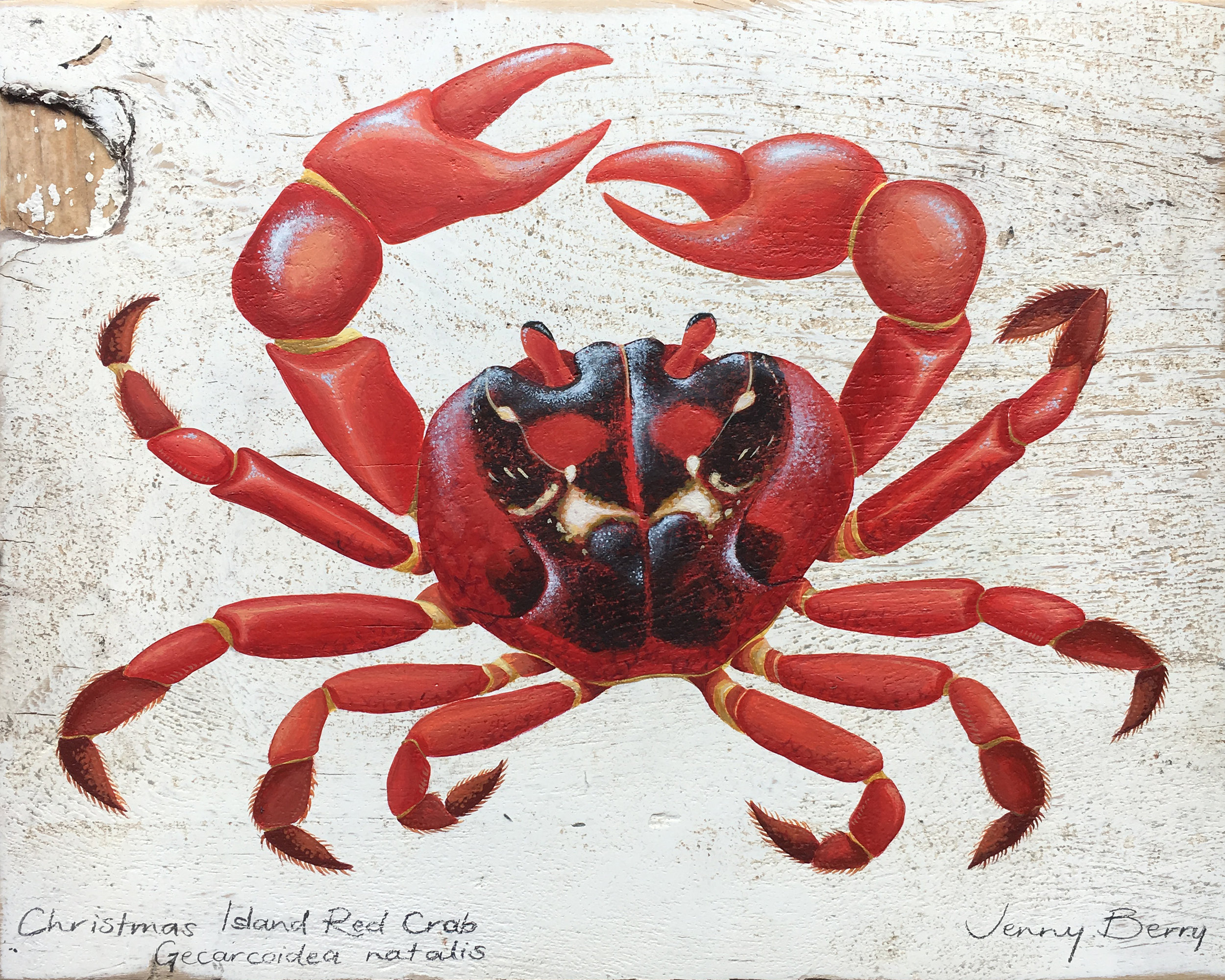 Christmas Island Red Crab.jpg