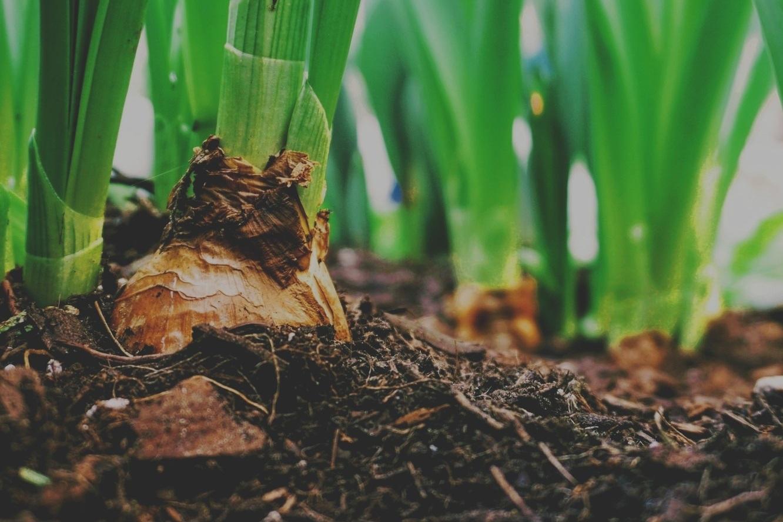 Compost & Soil -