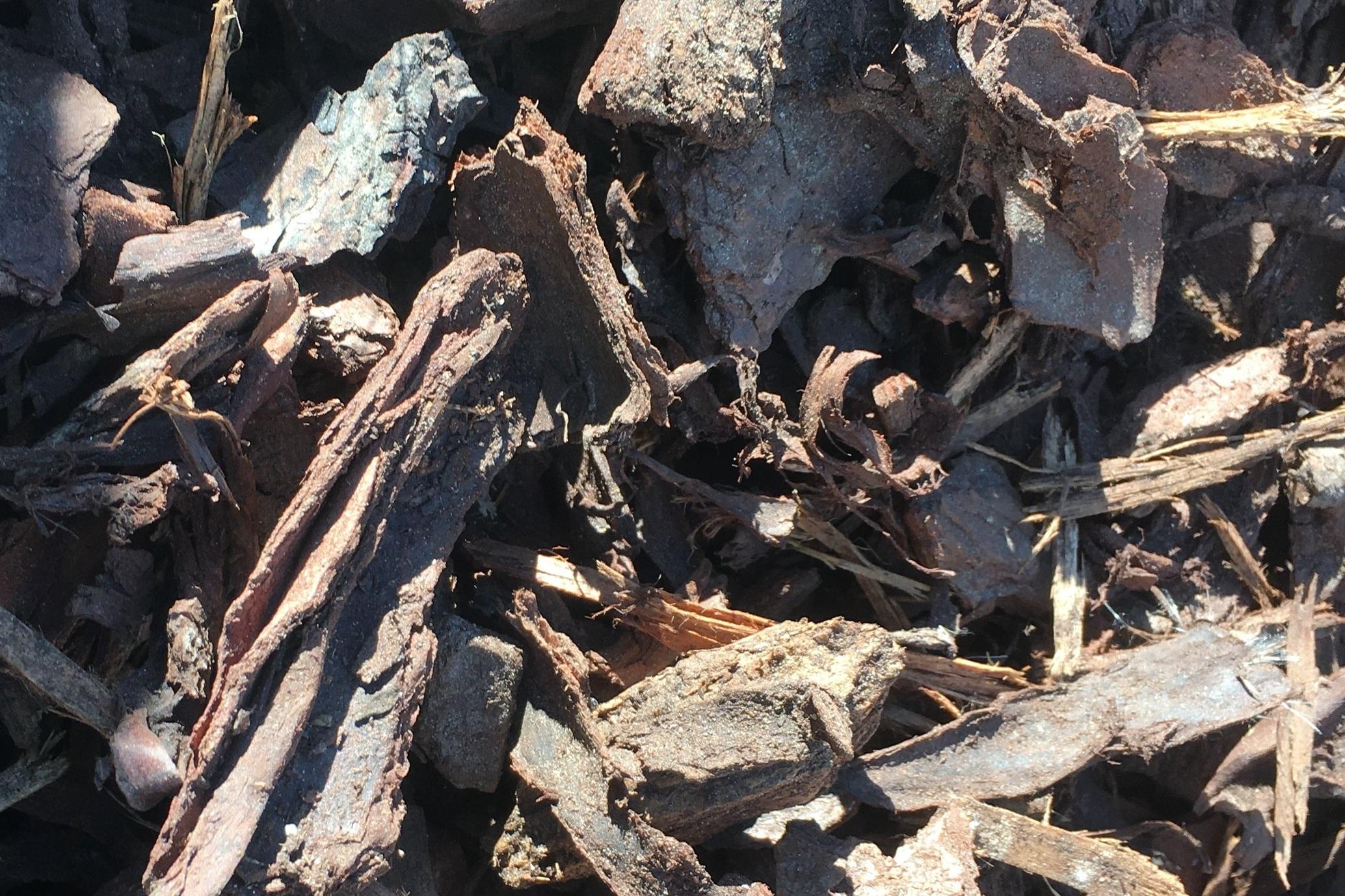 50mm Pine Bark -