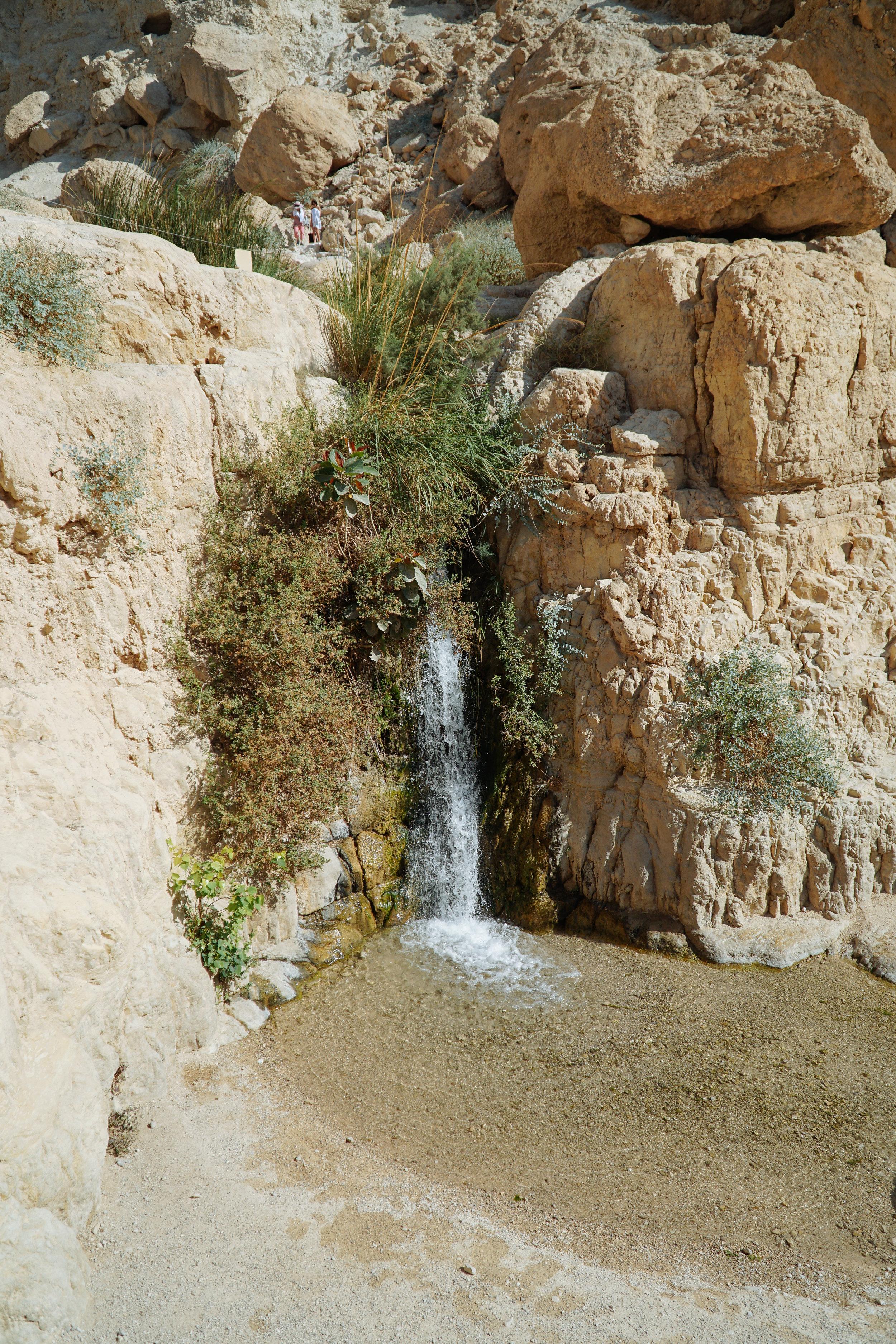 Julia Friedman visits Ein Gedi in Israel Week 2.