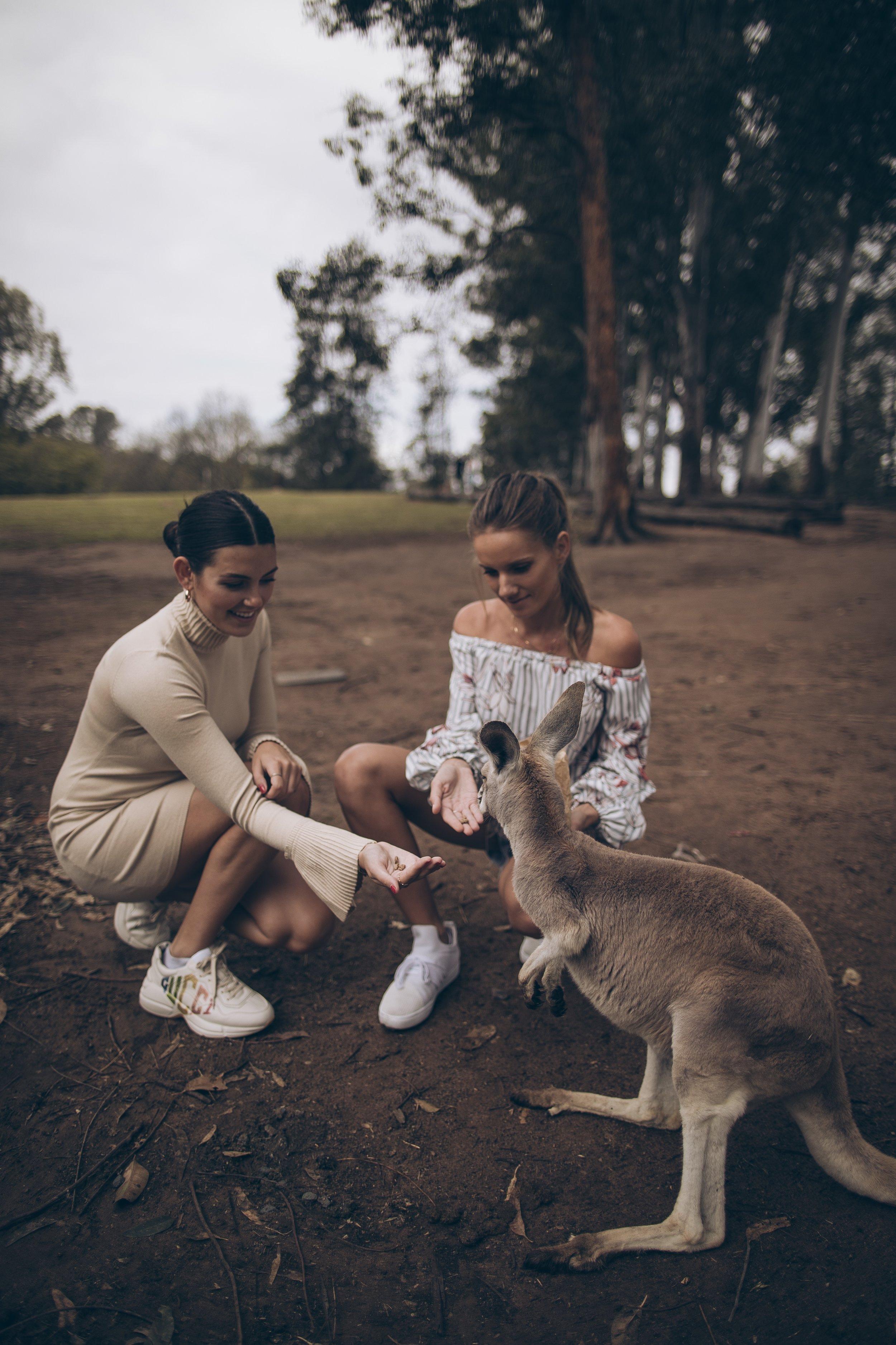 Lone Pine koala sanctuary September down under Brisbane Australia