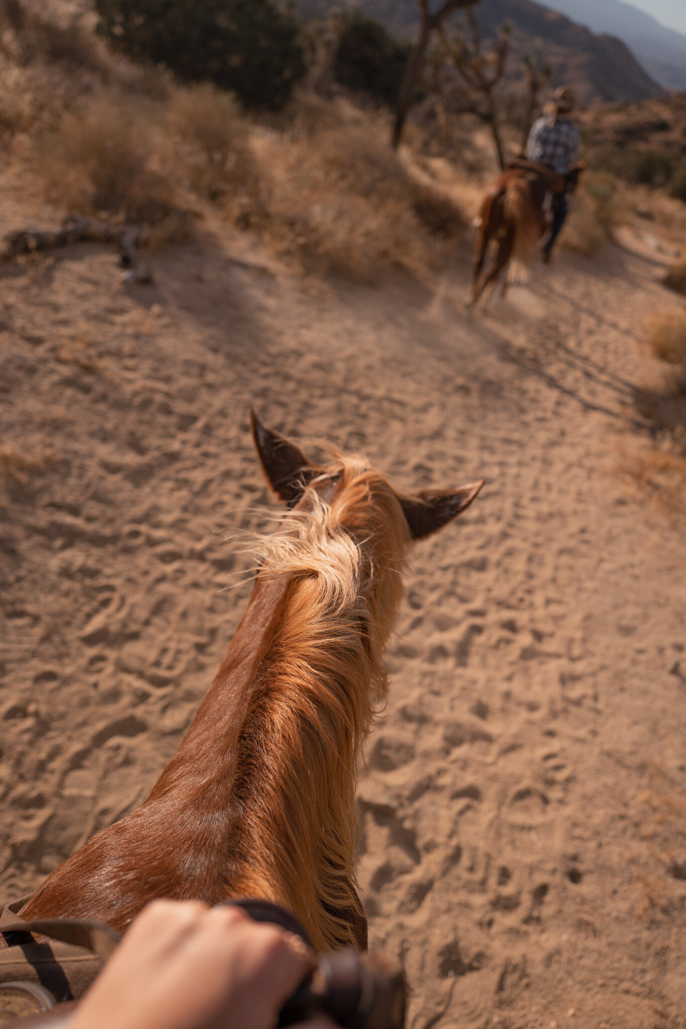horseback riding in Joshua tree knob hill ranch Joshua tree guide